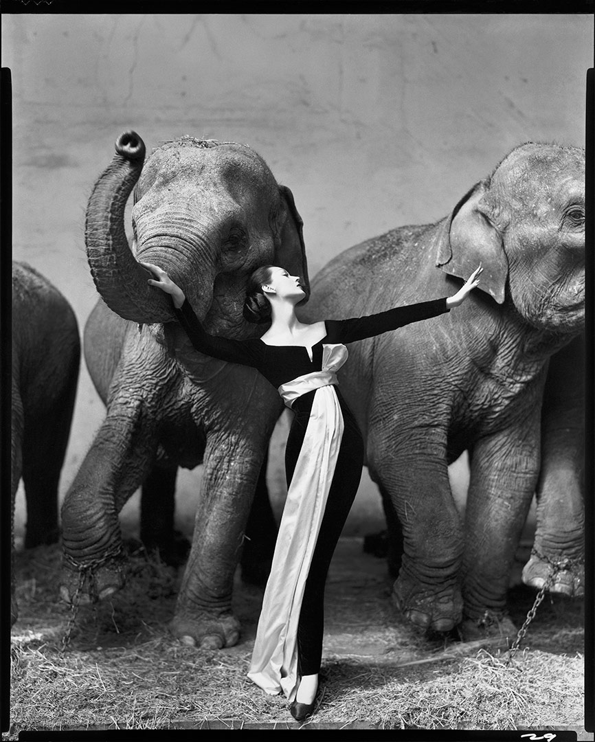 time-100-influential-photos-richard-avedon-dovima-elephants-45.jpg