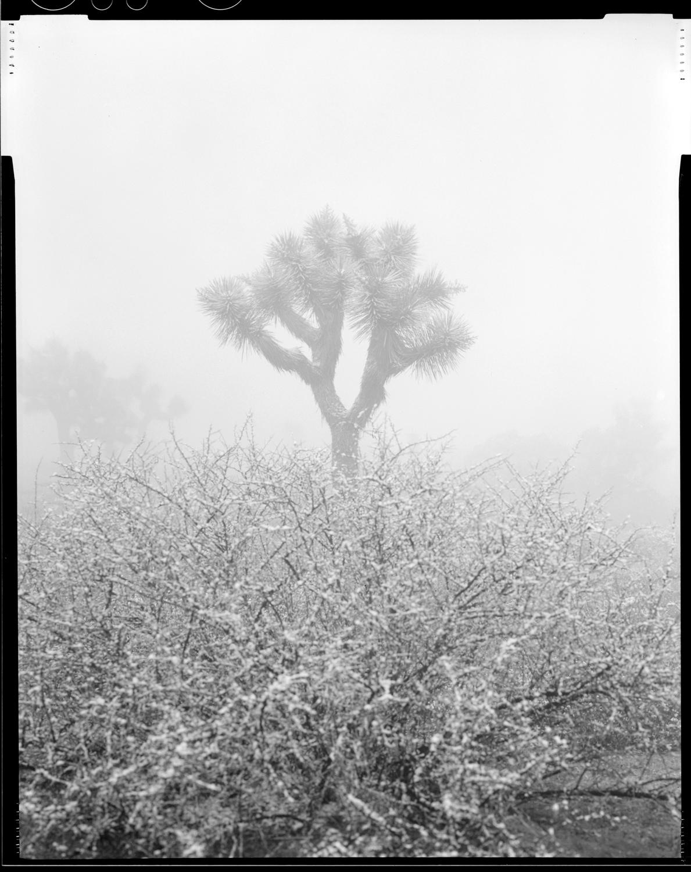 jtree.snow.jpg