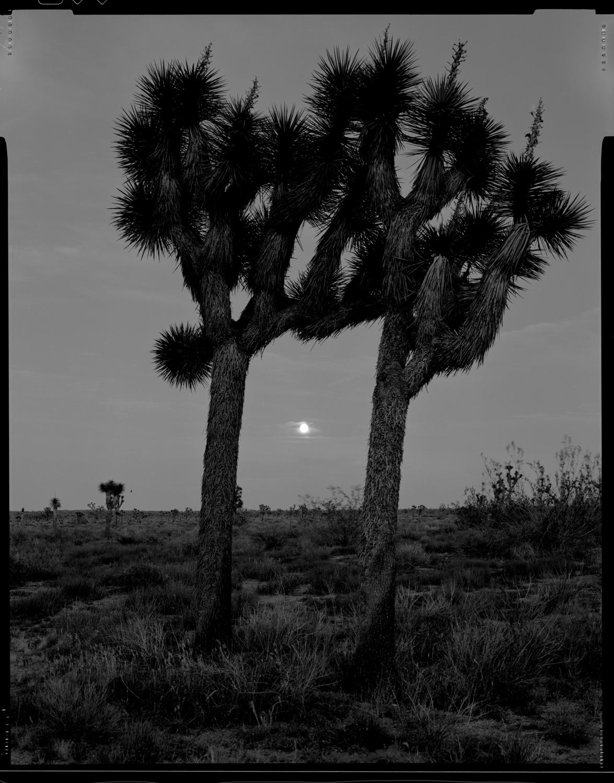 jtree.moon.jpg
