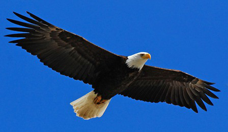 Are You a Hawk or an Eagle?