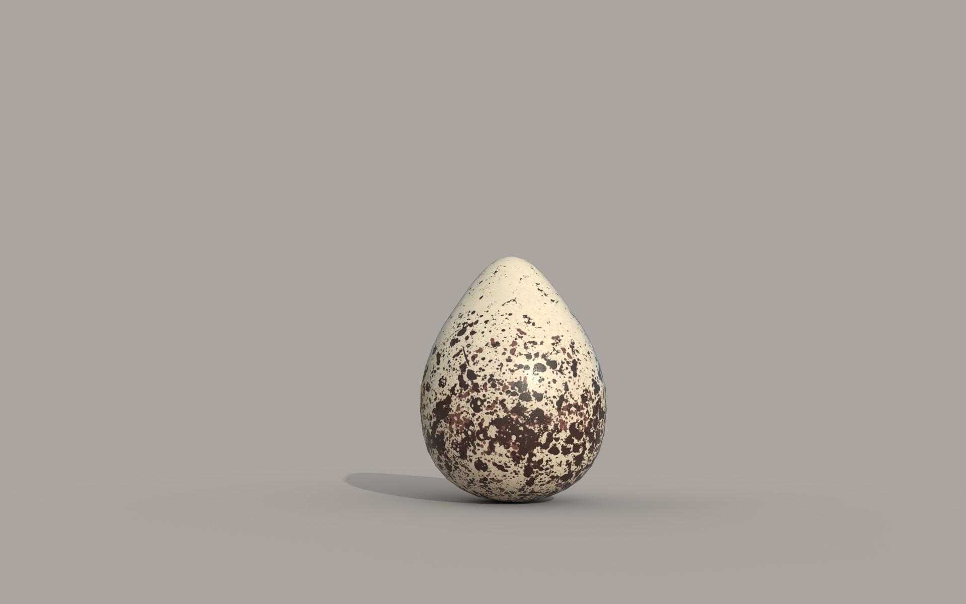 Kildeer Egg