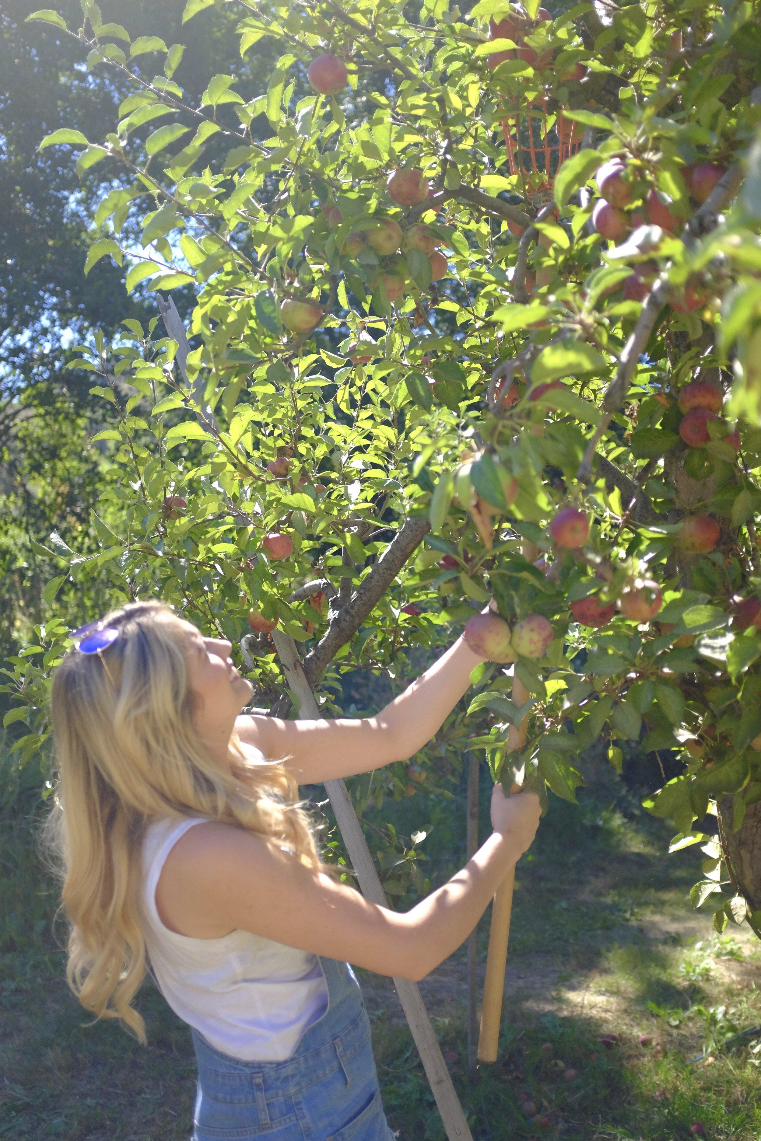 Apple Picking | Kaci Nicole
