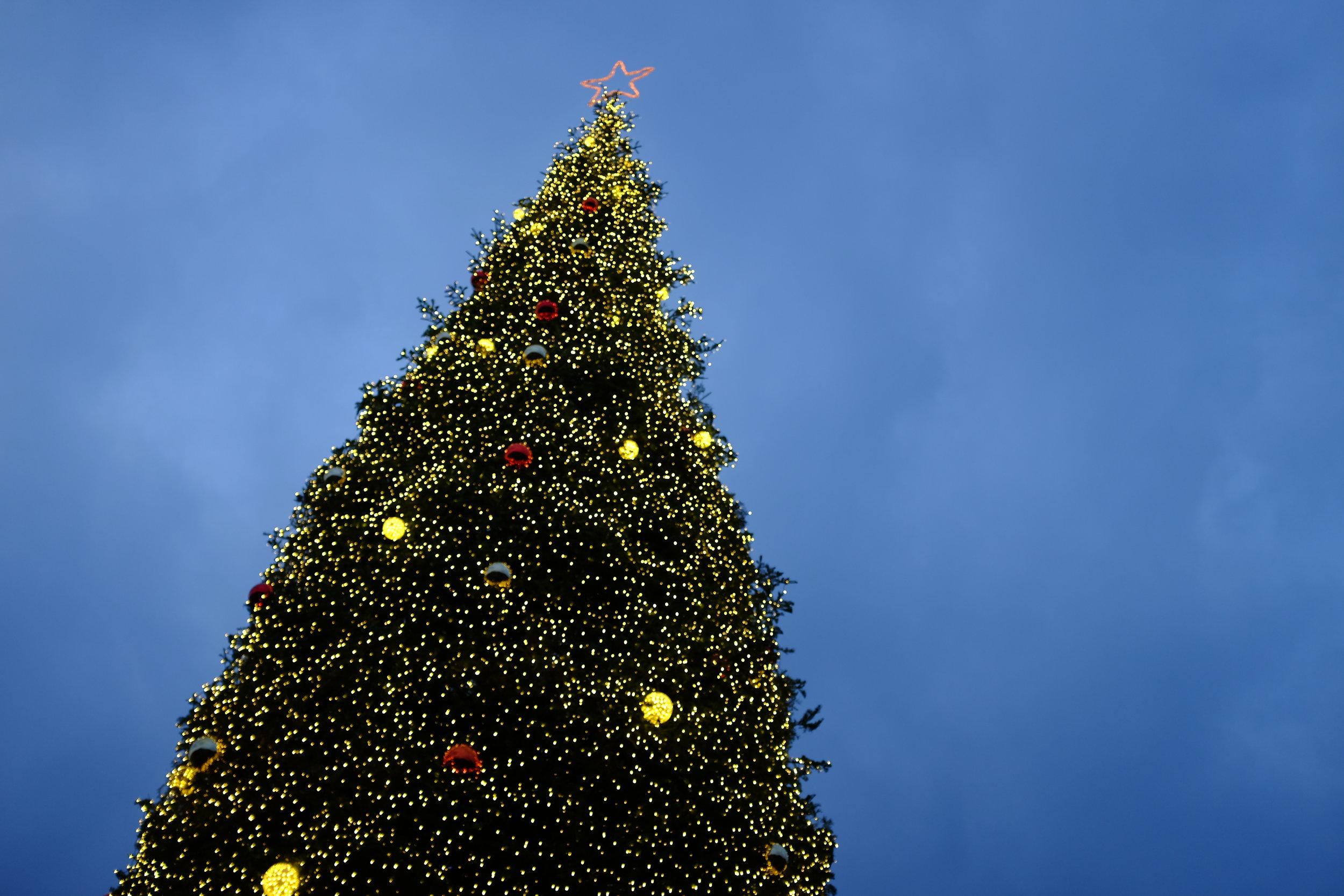 Kaci Nicole - Christmas Tree - Unmet Desires