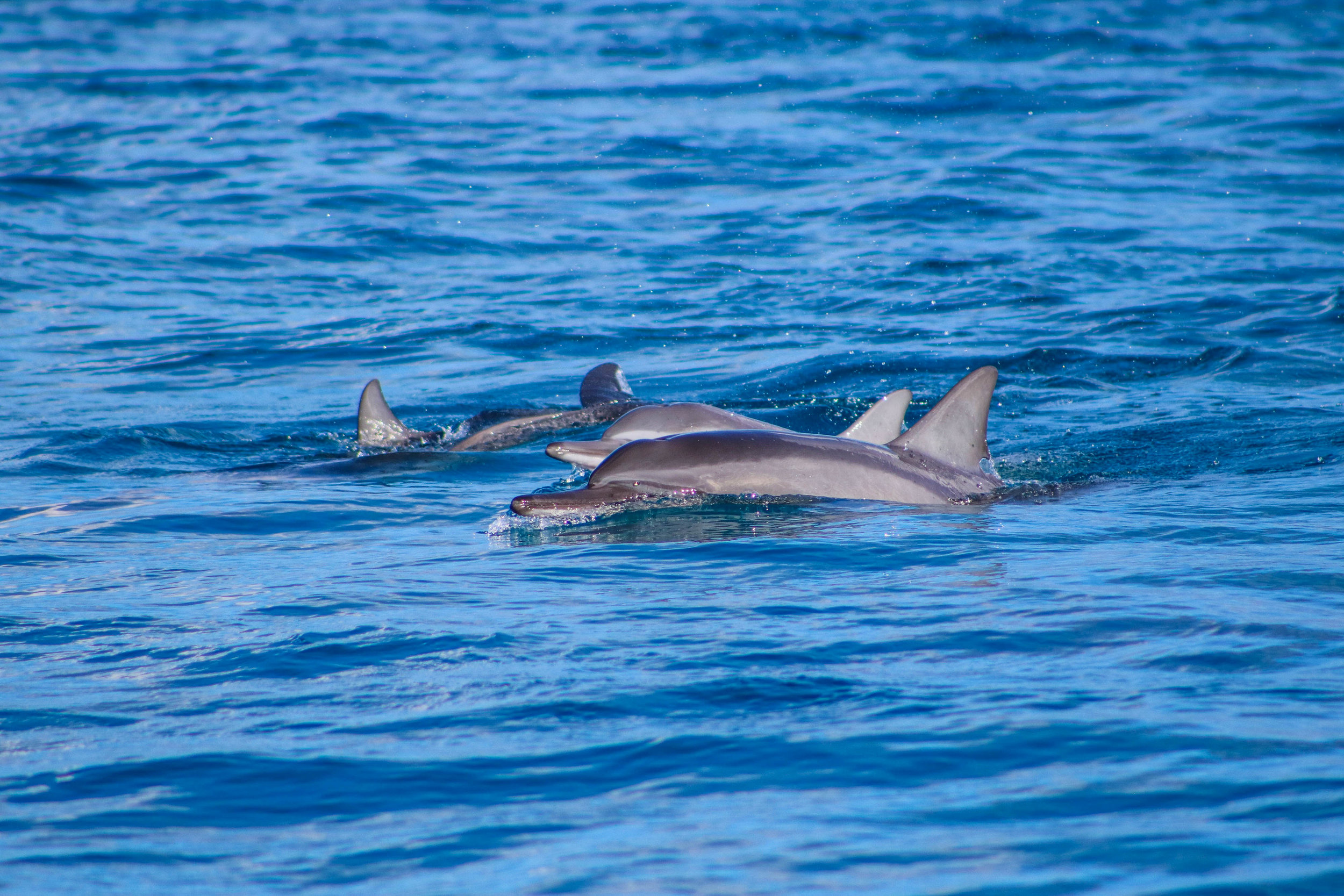 Swimming With Dolphins - 13 Things To Do On Oahu | Kaci Nicole