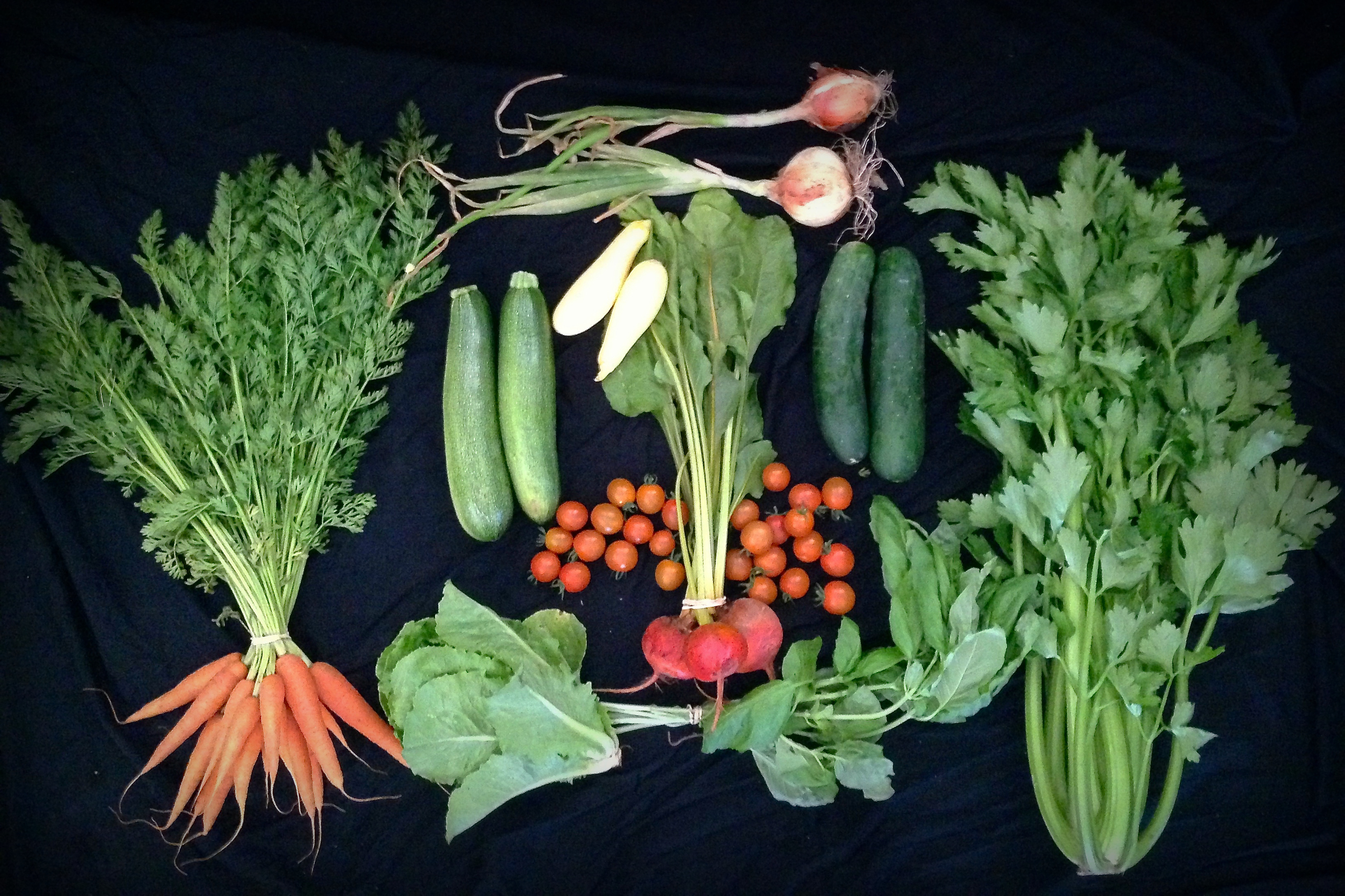 Spring/summer CSA, Week 7: carrots, cucumbers, beets, cherry tomatoes, zucchini, summer squash, celery, basil, Buttercrunch lettuce, broccoli (not pictured)