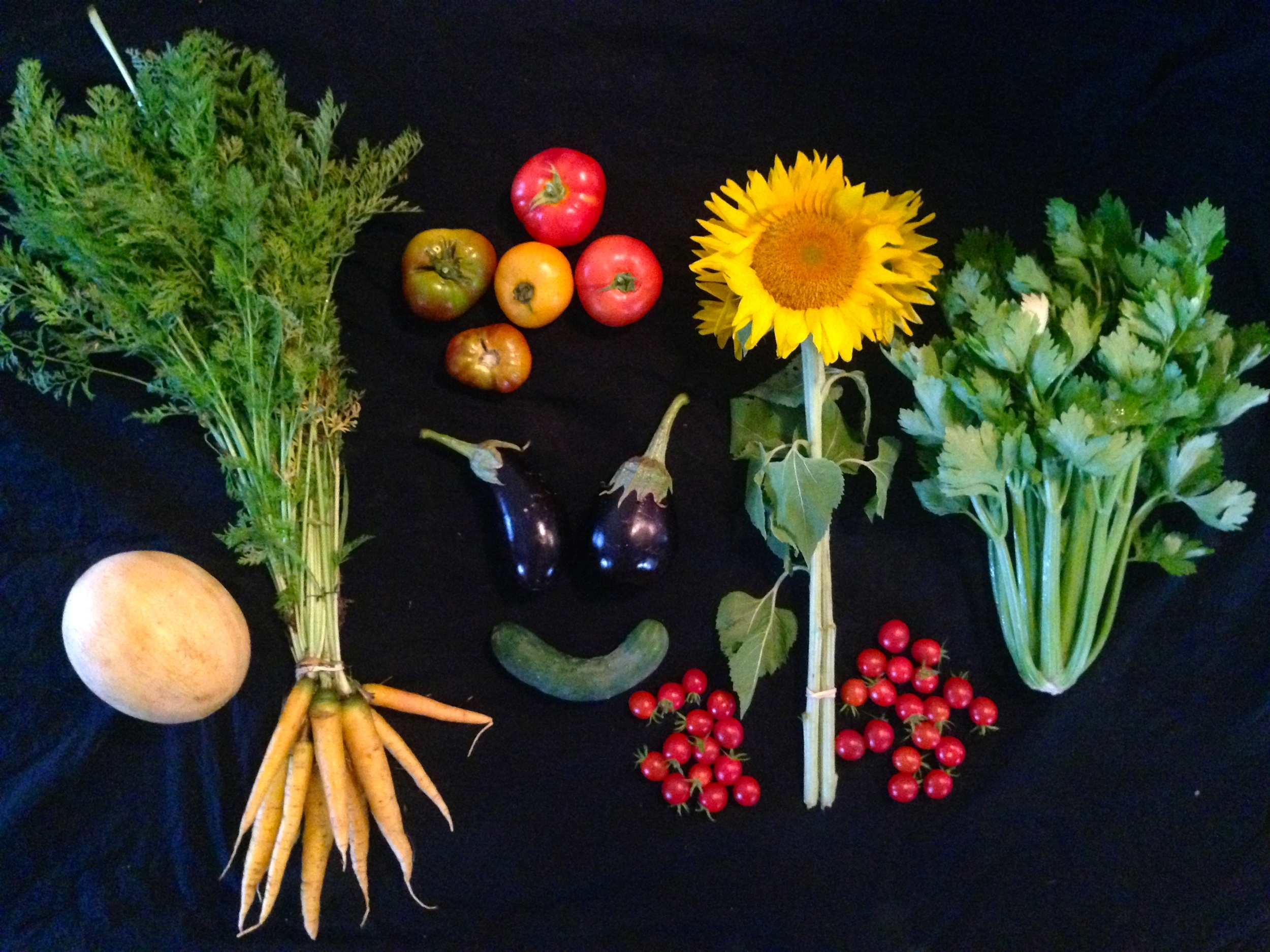 Week 10: cantaloupe, carrots, cucumber, eggplant, cherry tomatoes, sunflowers, celery, slicing tomatoes