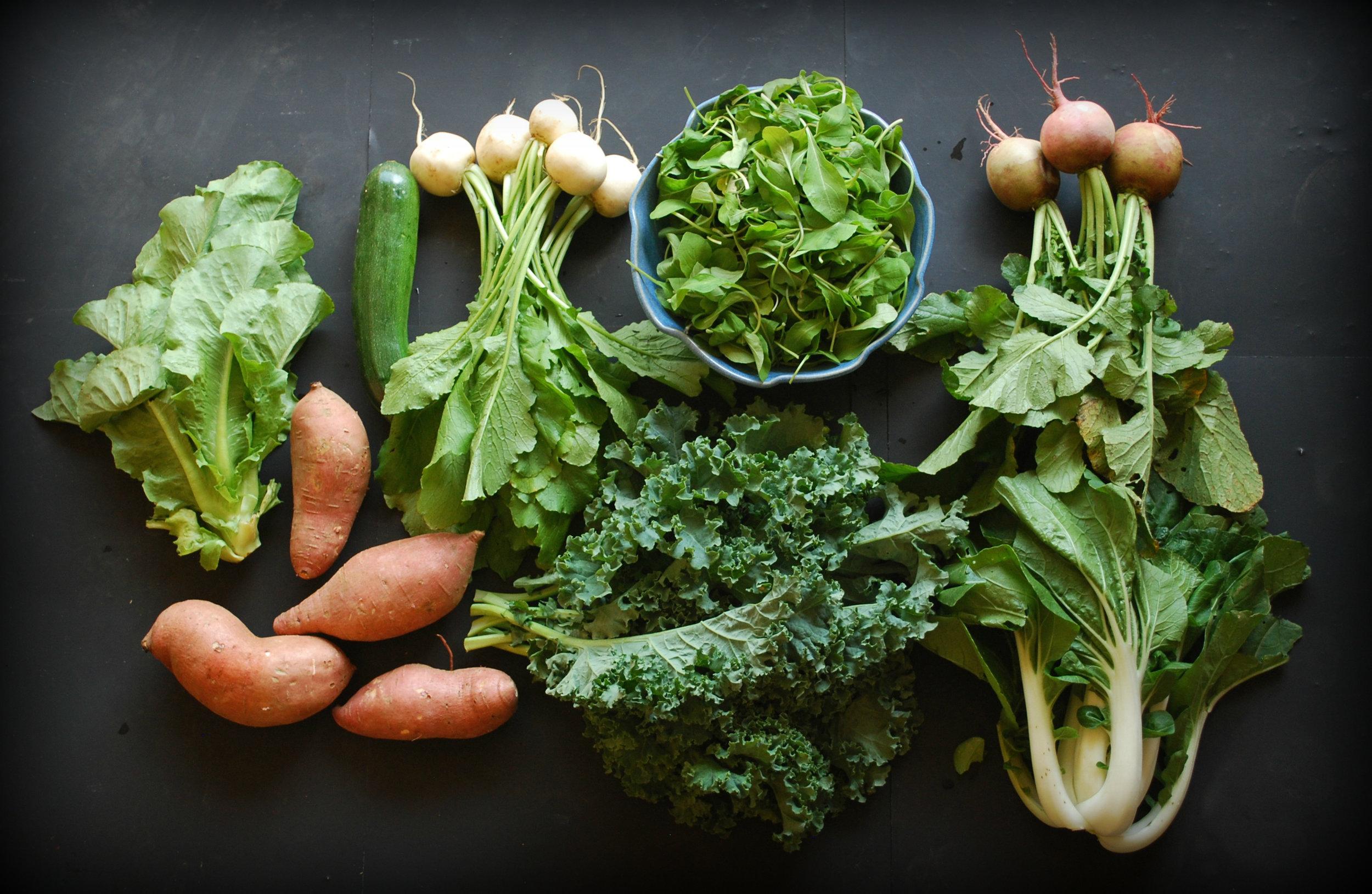 Your Fall CSA Week 1: sweet potatoes, Romaine lettuce,zucchini, salad turnips arugula, kale, Bok Choy, and watermelon radishes.