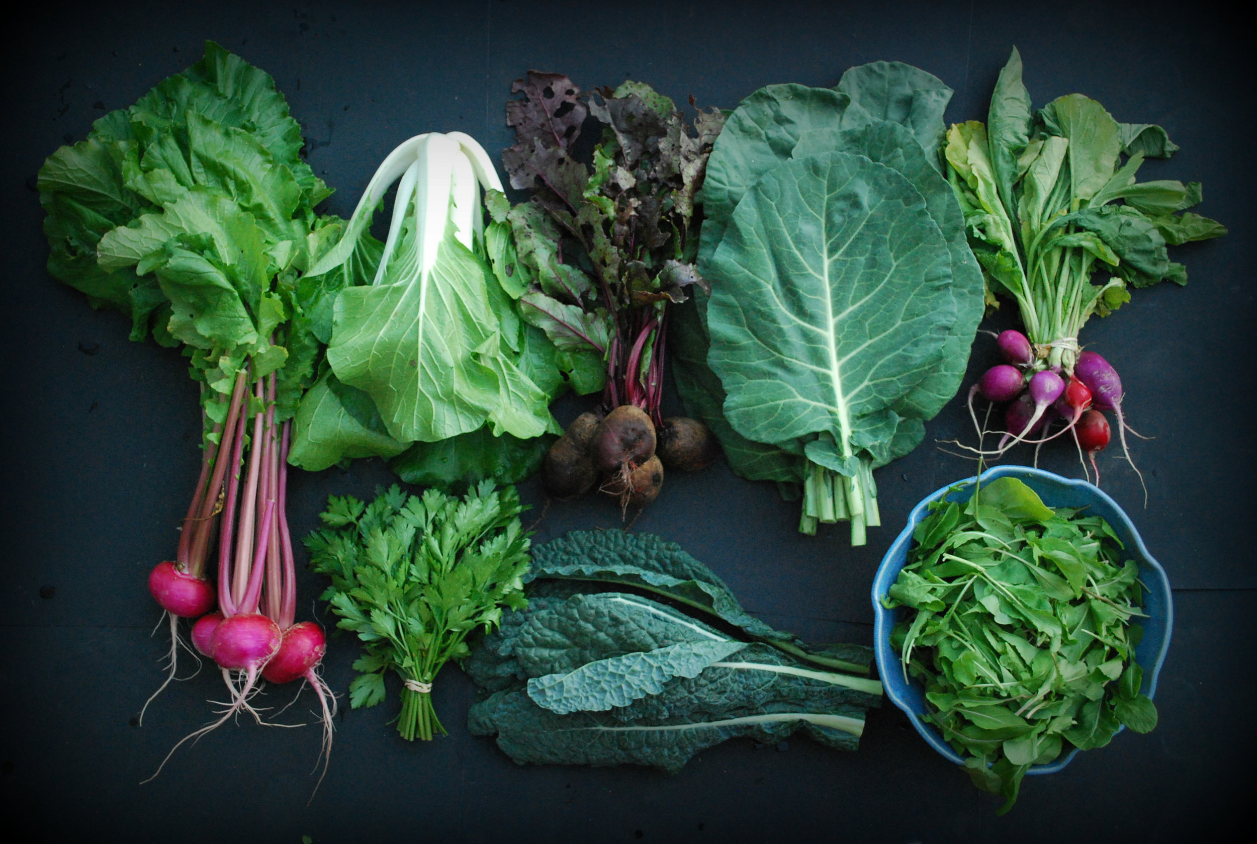 Your Week 3 share: Scarlet Queen turnips, bok choy, parsley, beets, dinosaur kale, collards, Easter egg radishes, arugula.