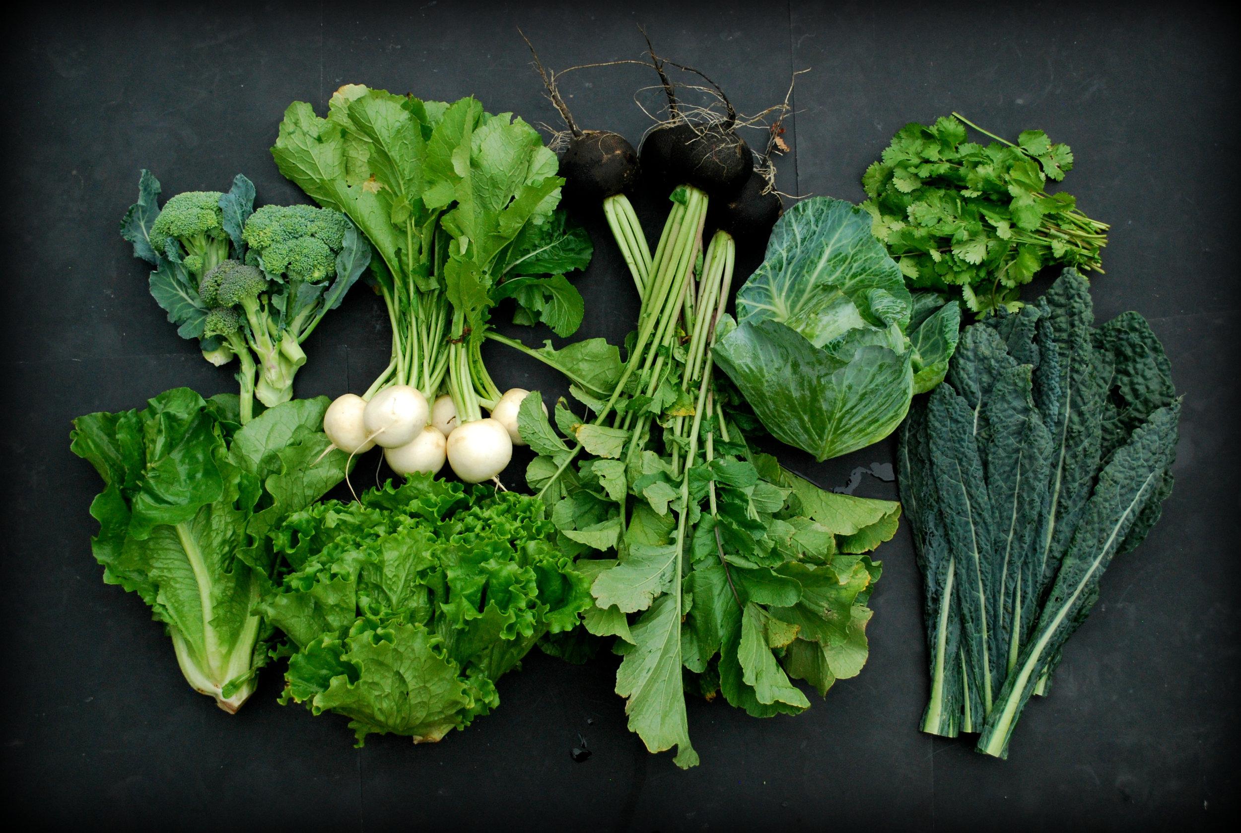 Your Week 6 CSA: Romaine lettuce, broccoli, salad turnips, green leaf lettuce, Nero Tondo radishes, cabbage, cilantro, dinosaur kale.