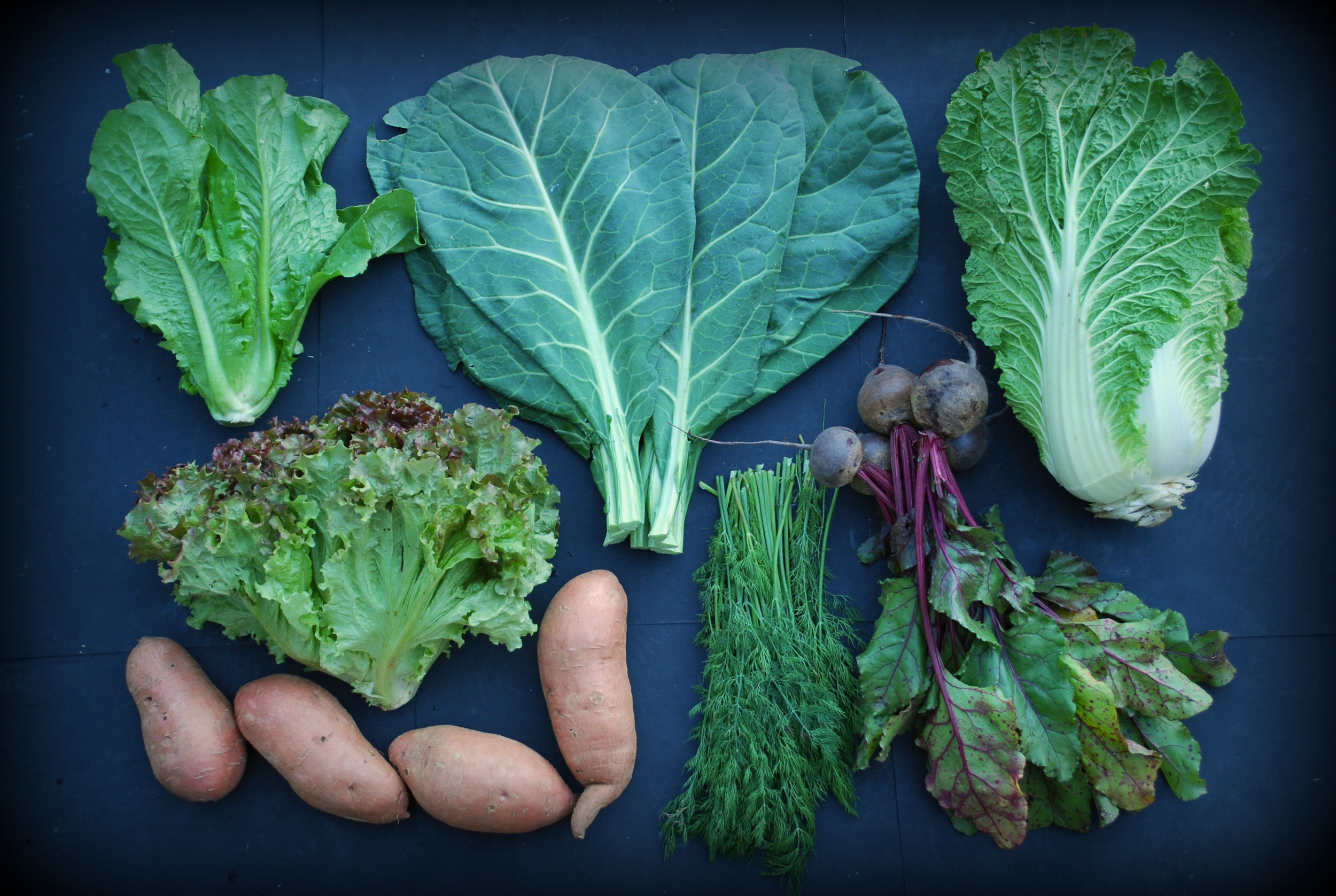 Your Week 7 Fall share: Romaine lettuce, red leaf lettuce, sweet potatoes, collards, dill, red beets, Napa cabbage, and curly kale (not pictured).