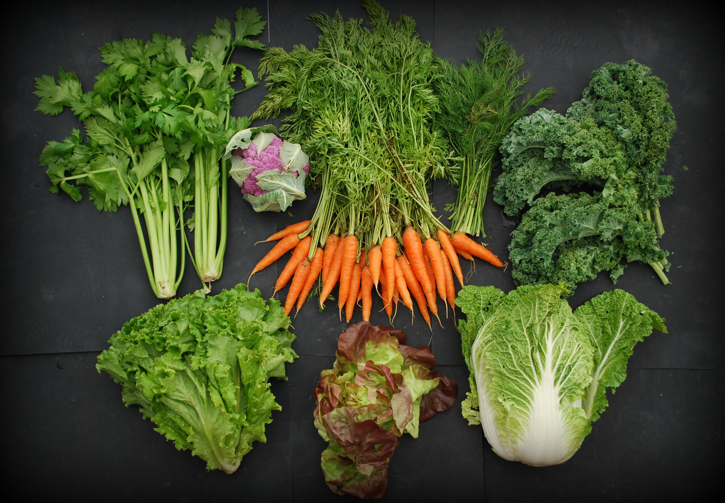 Your Week 9 share: celery, Romaine lettuce, red Butterhead lettuce, Napa cabbage, curly kale, dill, carrots, purple cauliflower.