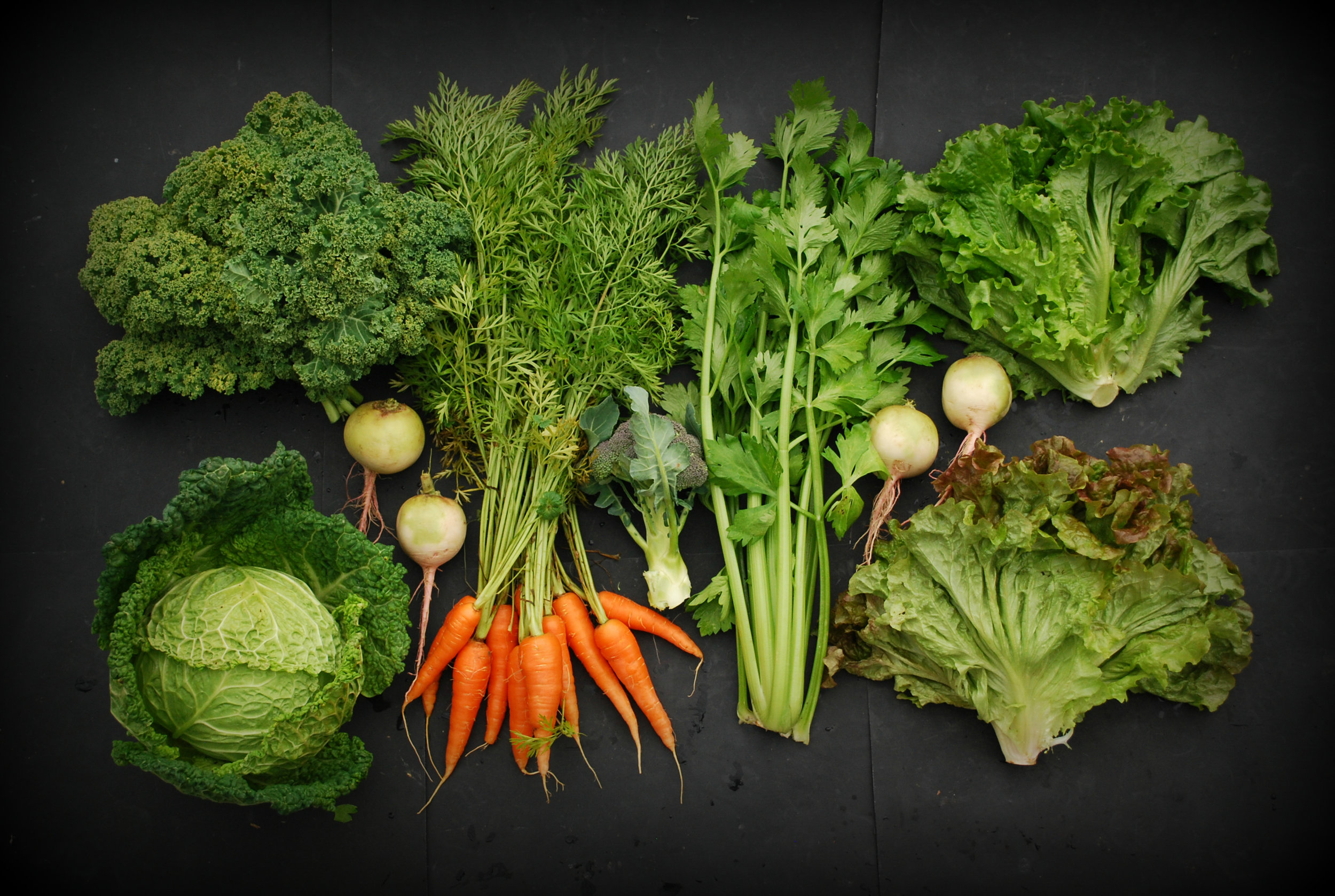 Your Week 11 CSA: Curly kale, Savoy cabbage, Watermelon radishes, carrots, broccoli, celery, green leaf lettuce, red leaf lettuce.