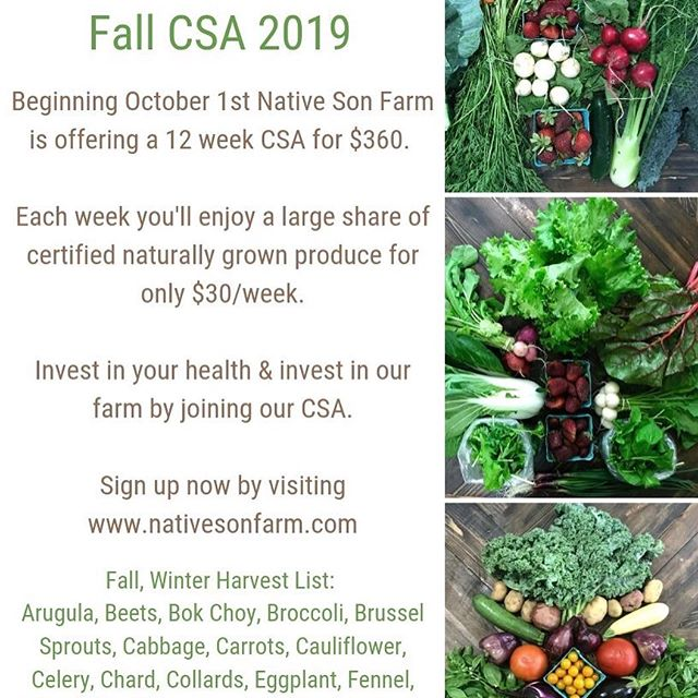 The time has come to reserve your spot as a CSA Member for Fall! $30 a week gets you: -some delicious fall veggies -a weekly storage and veggie how-to-use guide -2 cooking recipes a week tailored to your share -a place in our members only Facebook group (delivery options are available for residents in Tupelo City limits for an additional $6 a week!! Or total price of $432) *all of our best produce each week is prioritized for our CSA members;this means that when you commit to a share you are getting the best of what we grow first!! Click our link in the bio and sign up today!