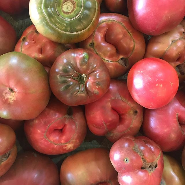 Today in the farm stand we have: Cherry tomatoes Sungold cherry tomatoes Heirloom Tomatoes Slicing tomatoes Dino Kale Curly Kale Zucchini Roasting peppers  Bell peppers Squash  Celery  Wax beans Cabbage Carrots Red Onion  Blueberries  3sip soda Pastures eggs Selected cheeses Whole chicken  Sausage Chicken breast chicken thighs  Popsicles Bread And Flowers!!!! Come see us today 2-6 at the farm stand and at the Oxford Market  Tomorrow 11-5 Thursday 2-6 or at the  New Albany Farmers Market in the afternoon Friday 11-5 Saturday 10-2 and in Oxford for the Saturday Farmers Market