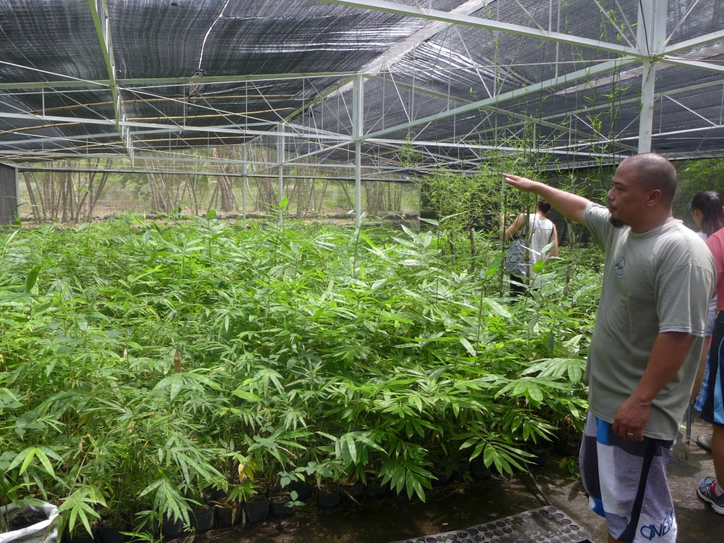 [Herbie Teodoro in his bamboo nursery at Bambusa Collabo]