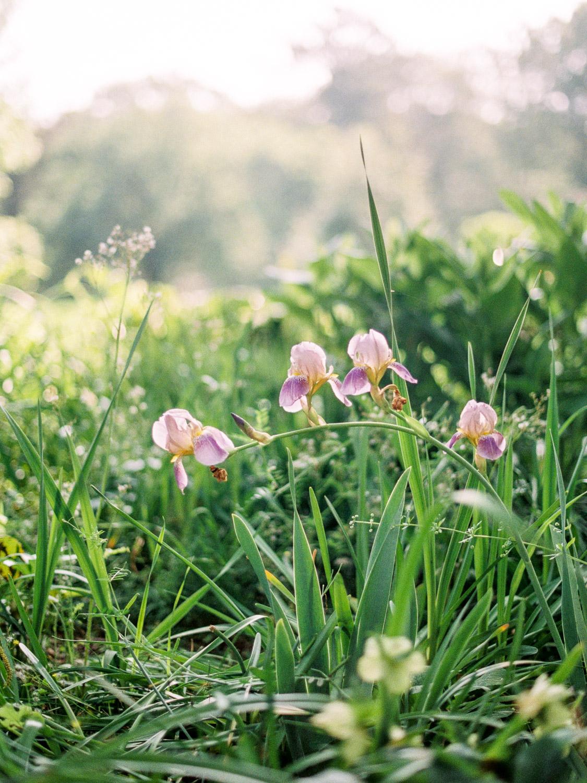 christinadavisphotography-romanticwedding-gardenweddinginspiration22.jpg