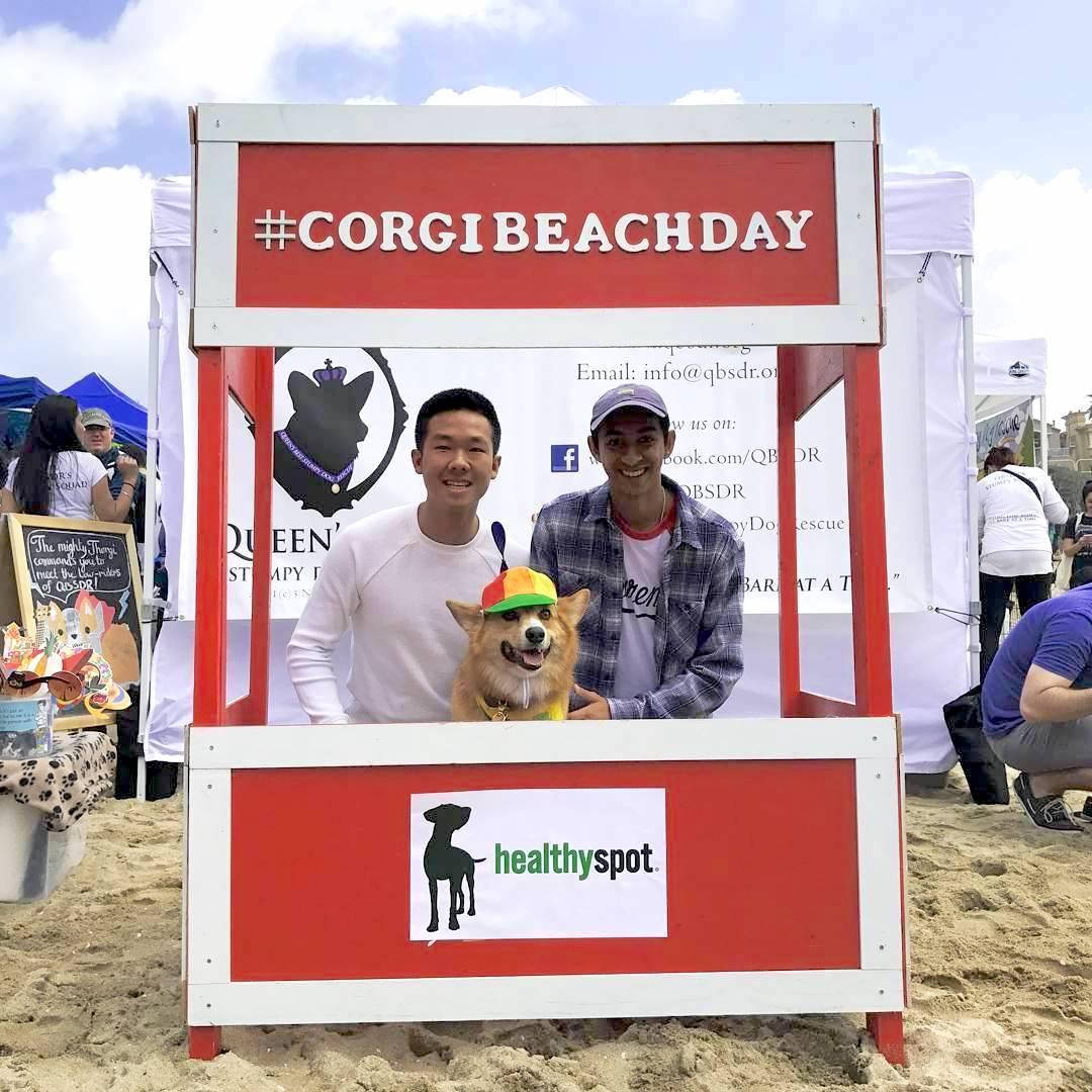 Corgi Beach Day 2017