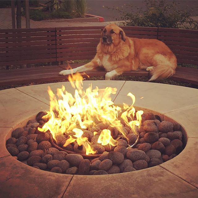 Why is mom taking so long to eat pizza? I'm ready to go home and have my #StellaAndChewys, this fire is getting way to hott... #HurryUpMom