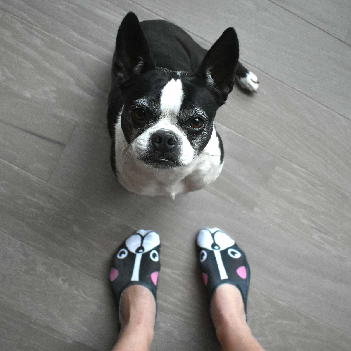 Made in USA Boston Terrier Socks only $8.50 at  www.LivingRoyal.com