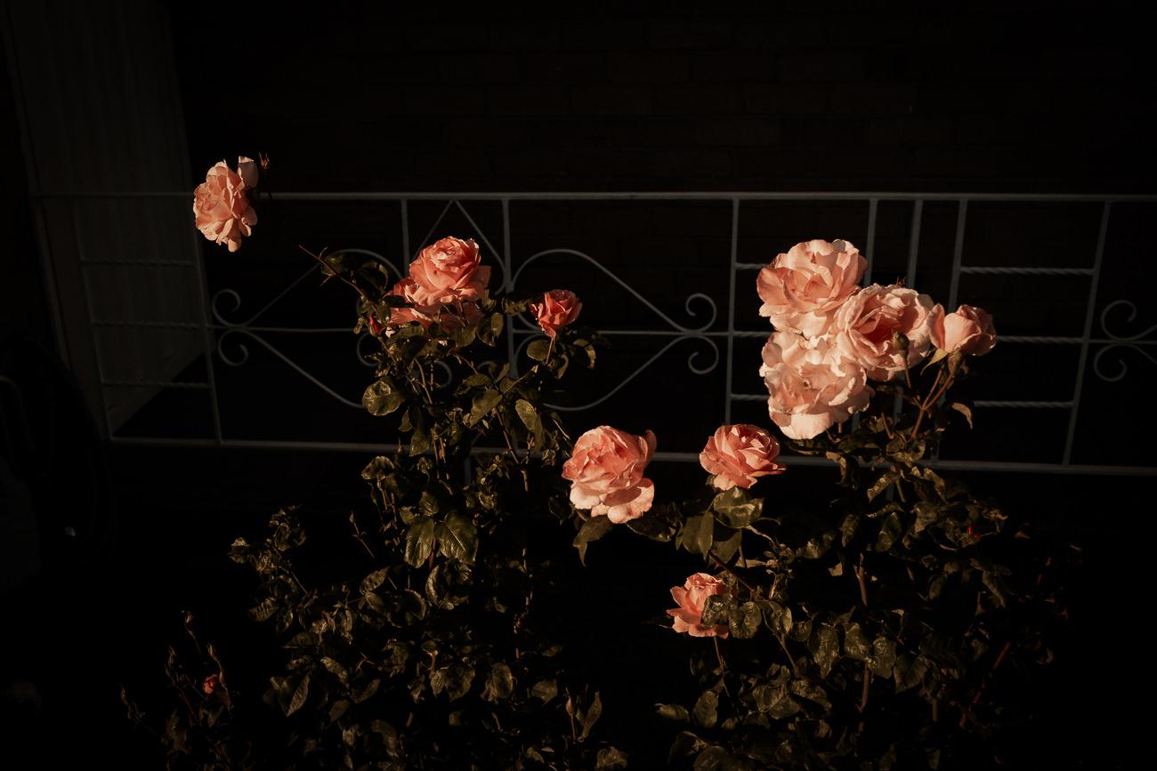 L1006735-Edit.jpg