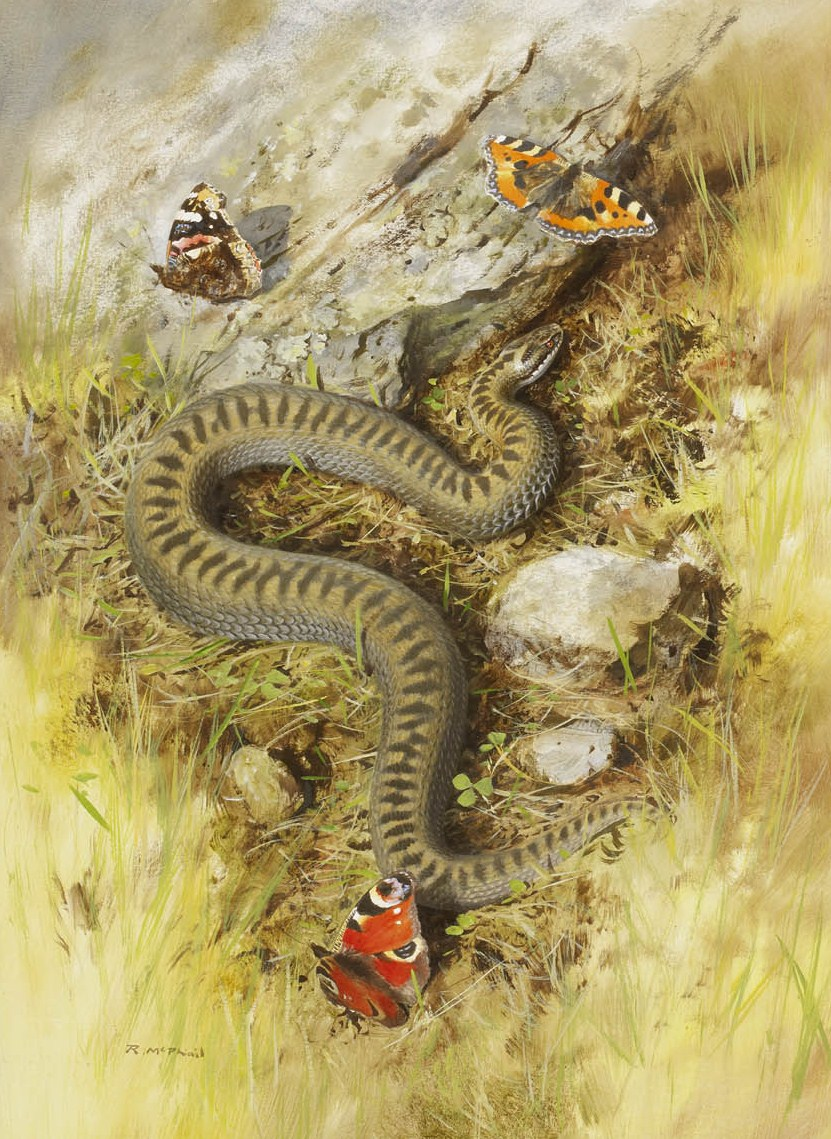 Adder and Butterflies