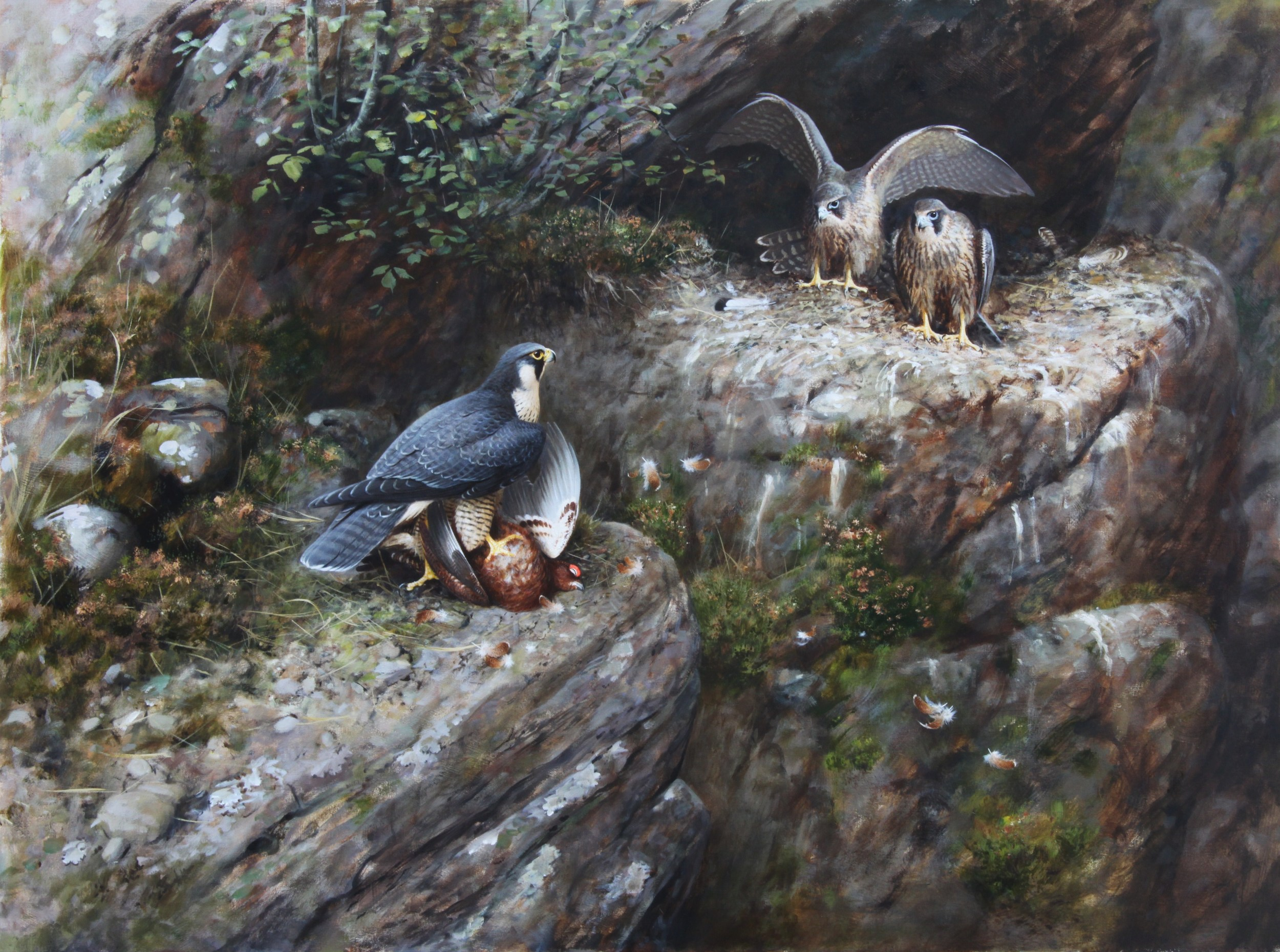 Peregrine and Young