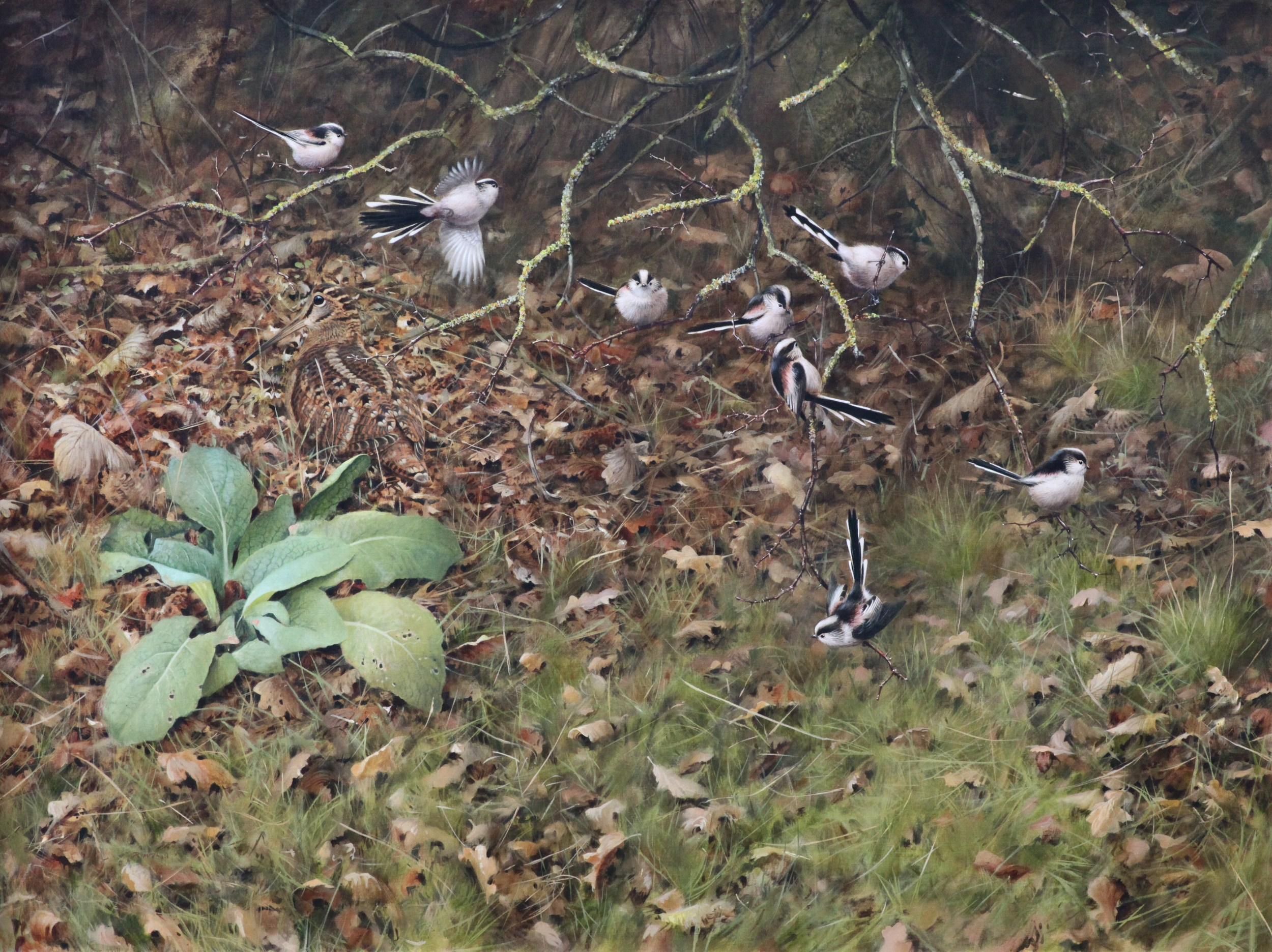 Woodcock and Long Tailed Tits