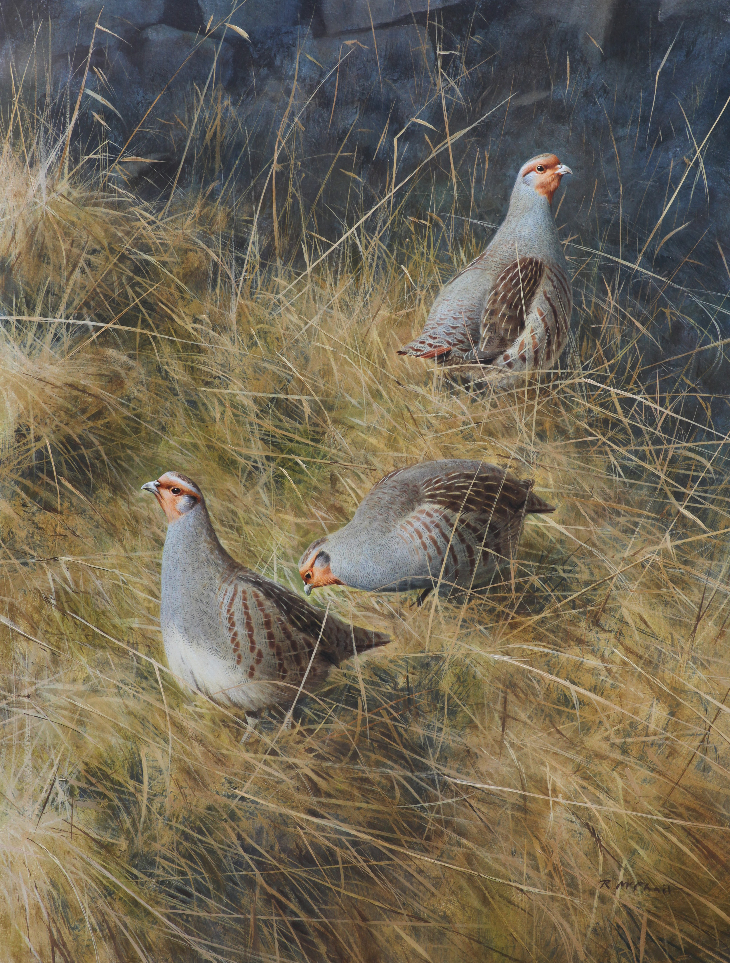 English Partridges in the Grass