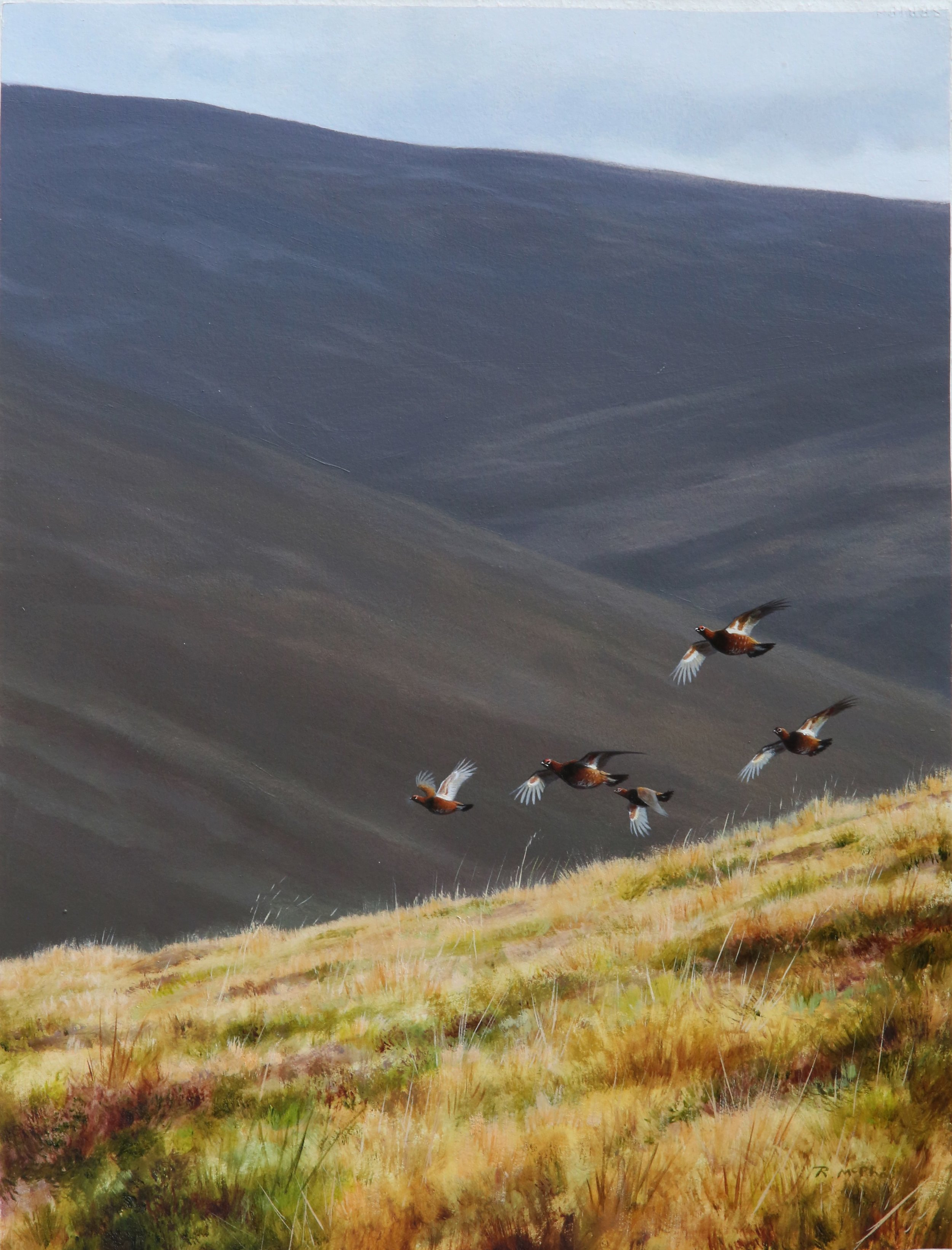 Driven Grouse