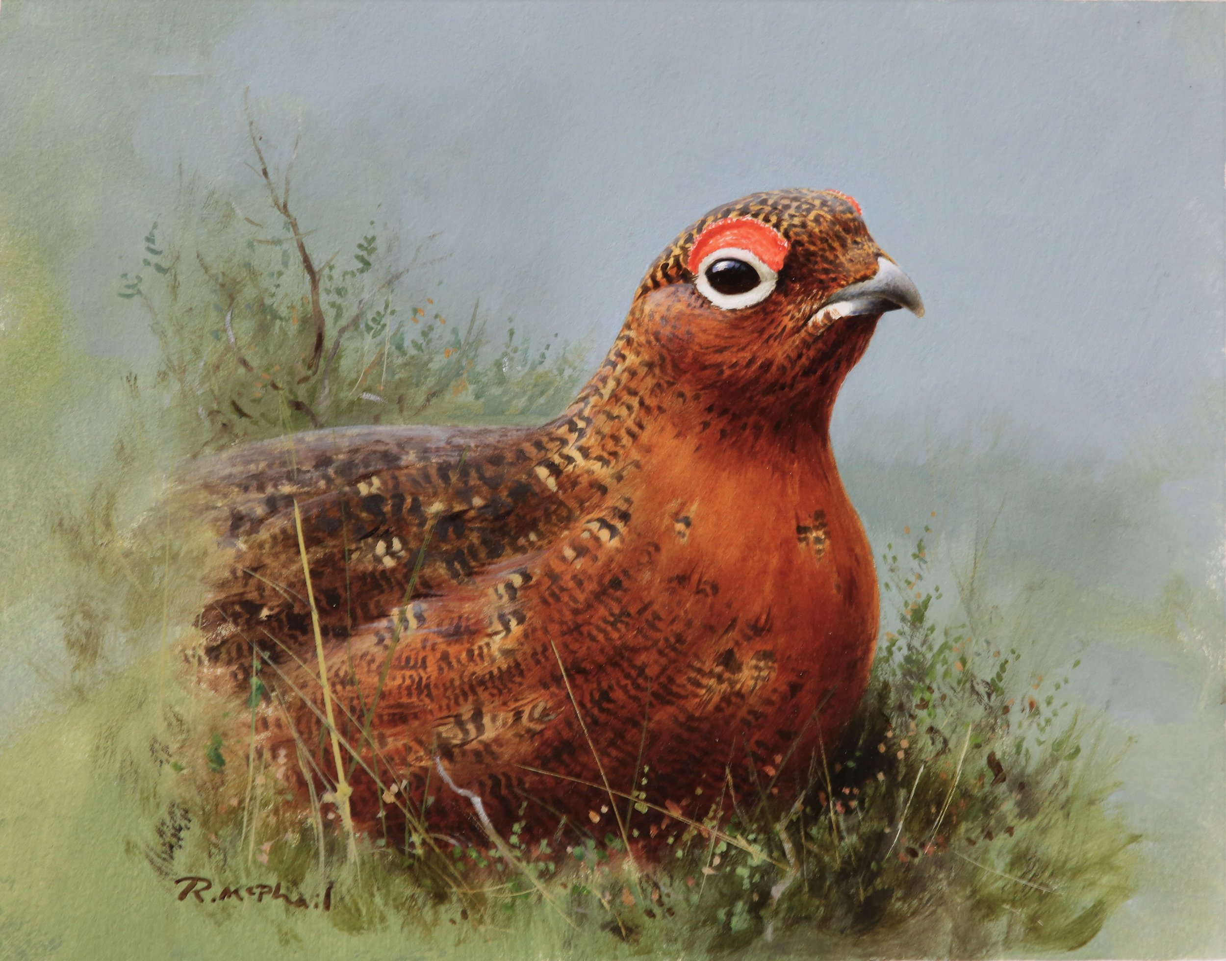 Grouse in Heather