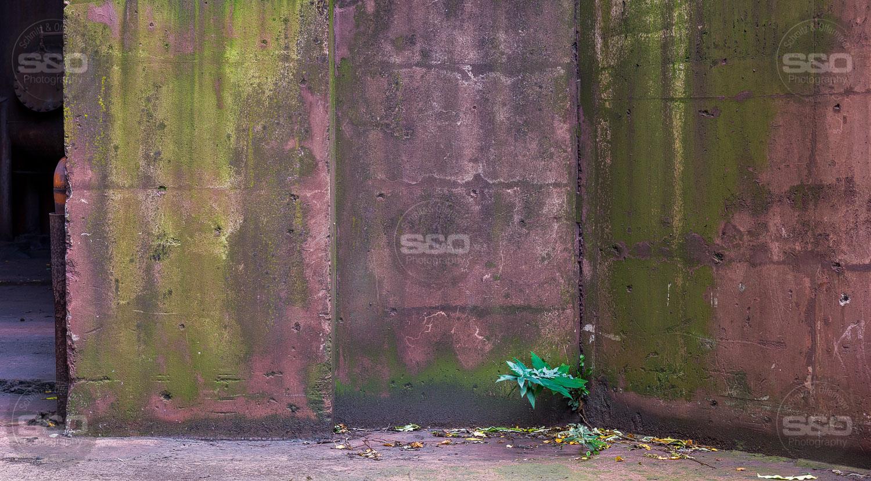 Urbex : The small green / La petite verte