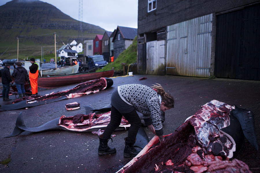 Frihild Holmsund makes cuts of leftover meat after a whale hunt in the Faroe Islands. Photo © Katie Currid