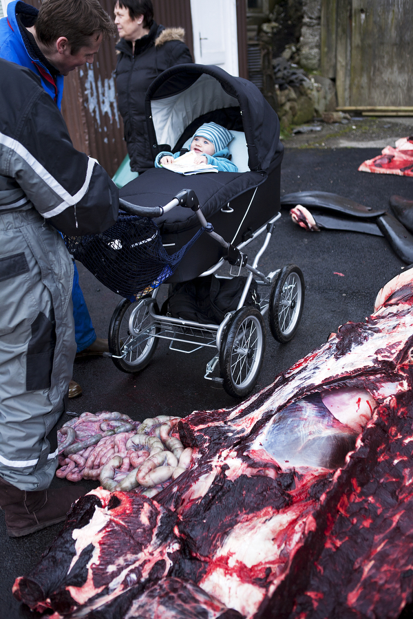 A man greets a baby among whale carcasses after a whale hunt in the Faroe Islands. Photo © Katie Currid
