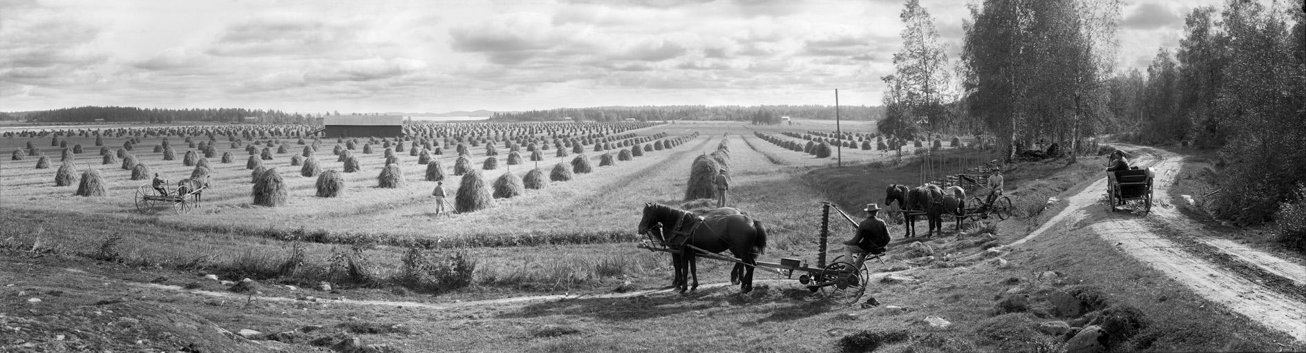 Mustiala fields, Finland, 1899