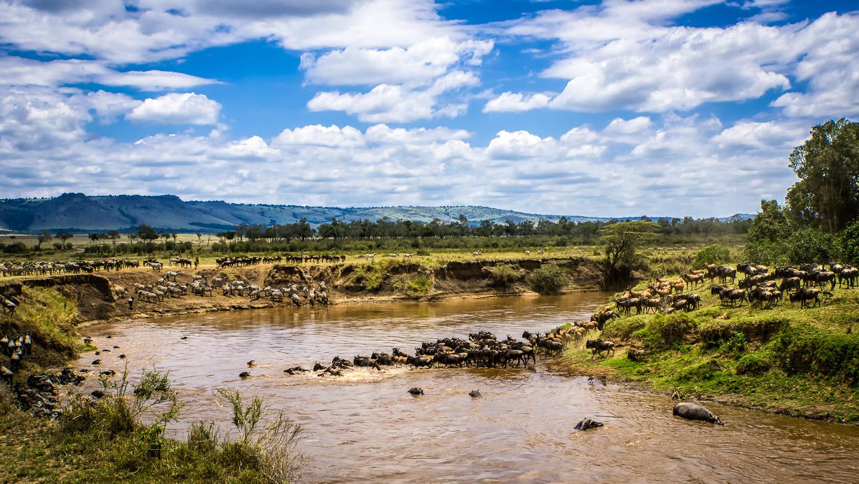 Crossing the Mara River, Mara Triangle , Kenya