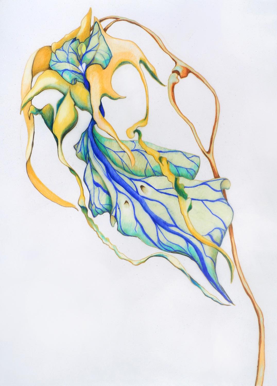 Bird-cowskull-Orchid.jpg
