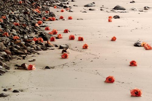 roses on a beach jo levine photograph