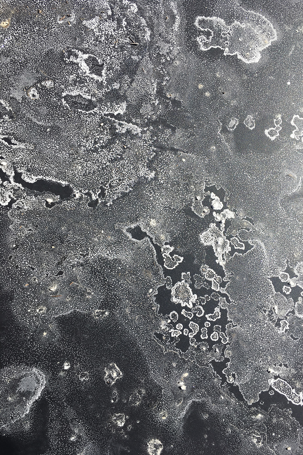 """Distant Galaxies   Jo Levine  Photograph printed on metal  12"""" x 18""""  $225   Click to inquire"""