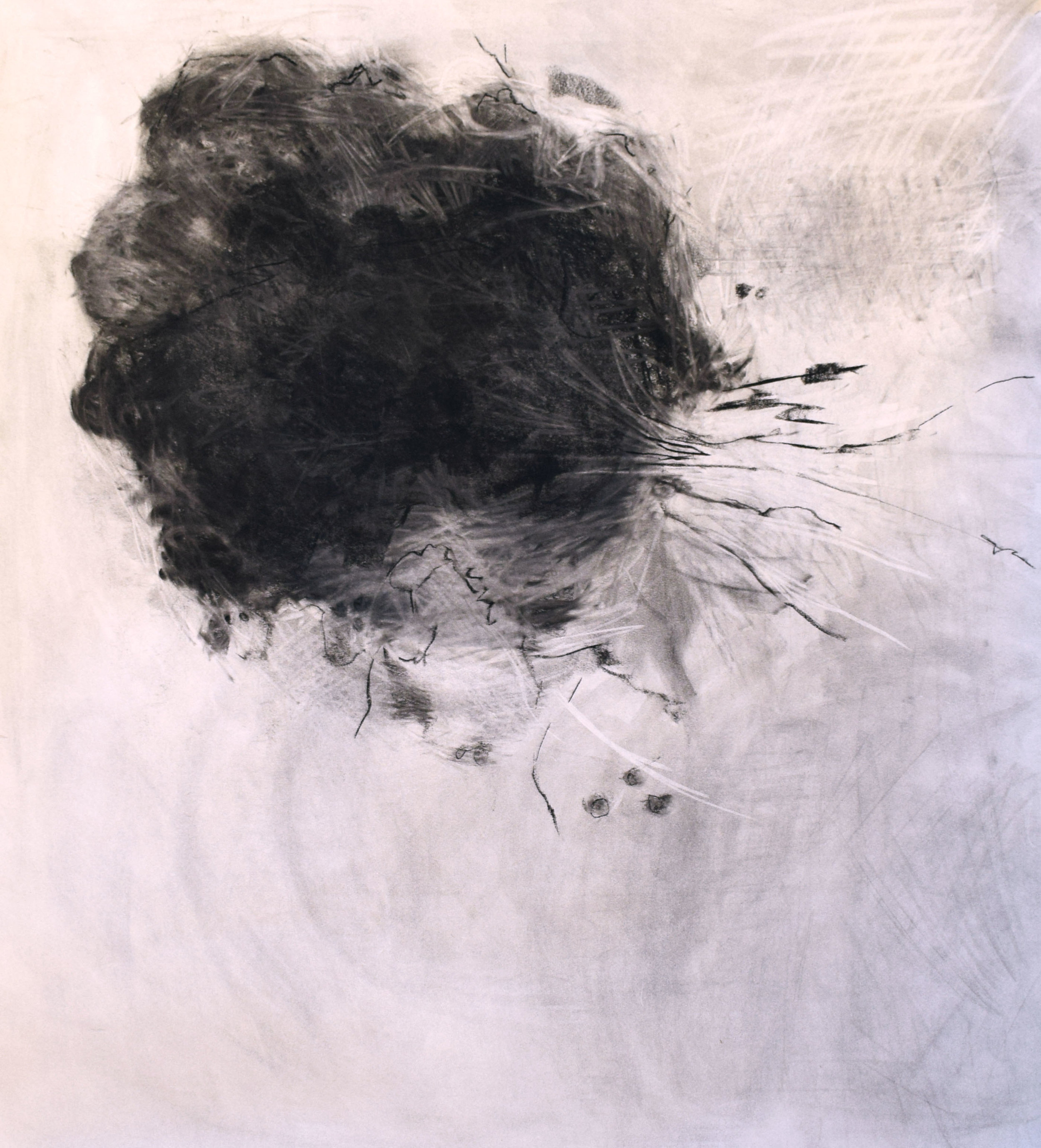 """#18 Exploding Tree   Charcoal on Paper  37"""" x 38""""  SOLD"""