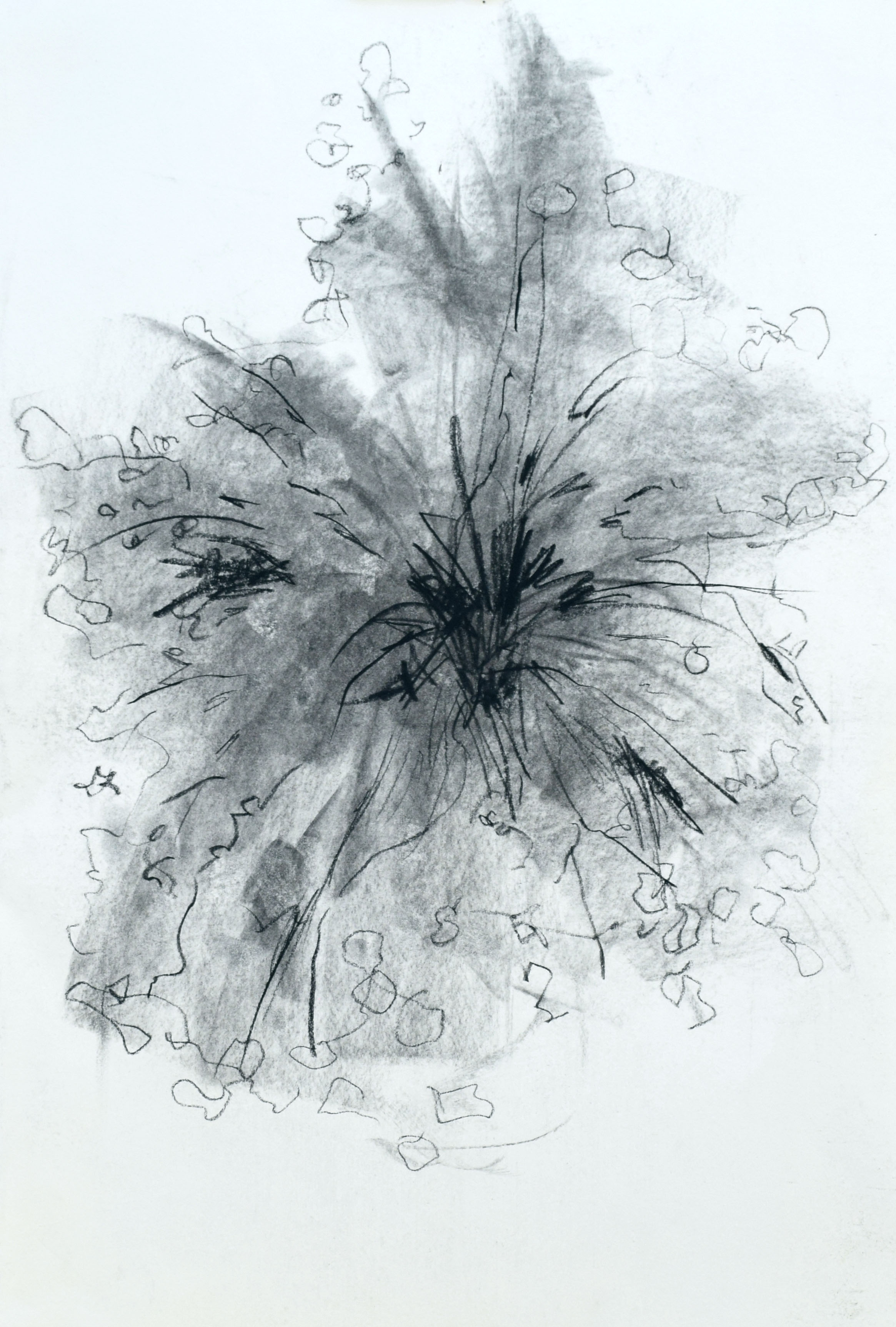 """#14 Blooming   Charcoal on Paper  14 ½"""" x 20 ½""""  $600   Click to Inquire"""