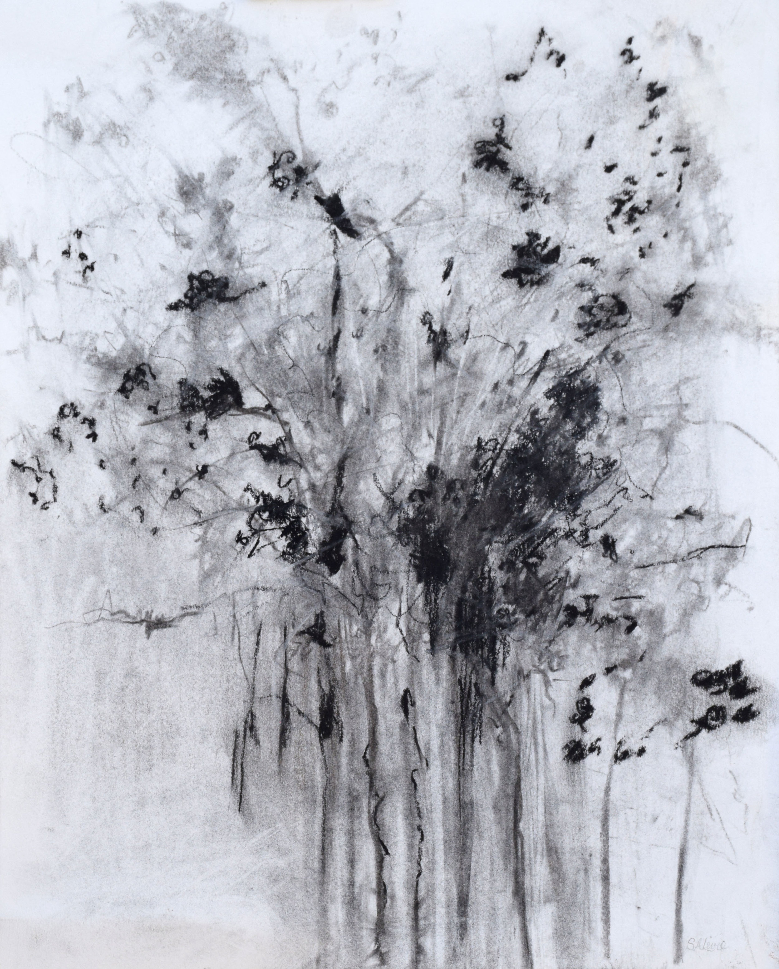 """#2 Flowering Tree   Charcoal on Paper  16 ½"""" x 19 ½""""  $600   Click to Inquire"""