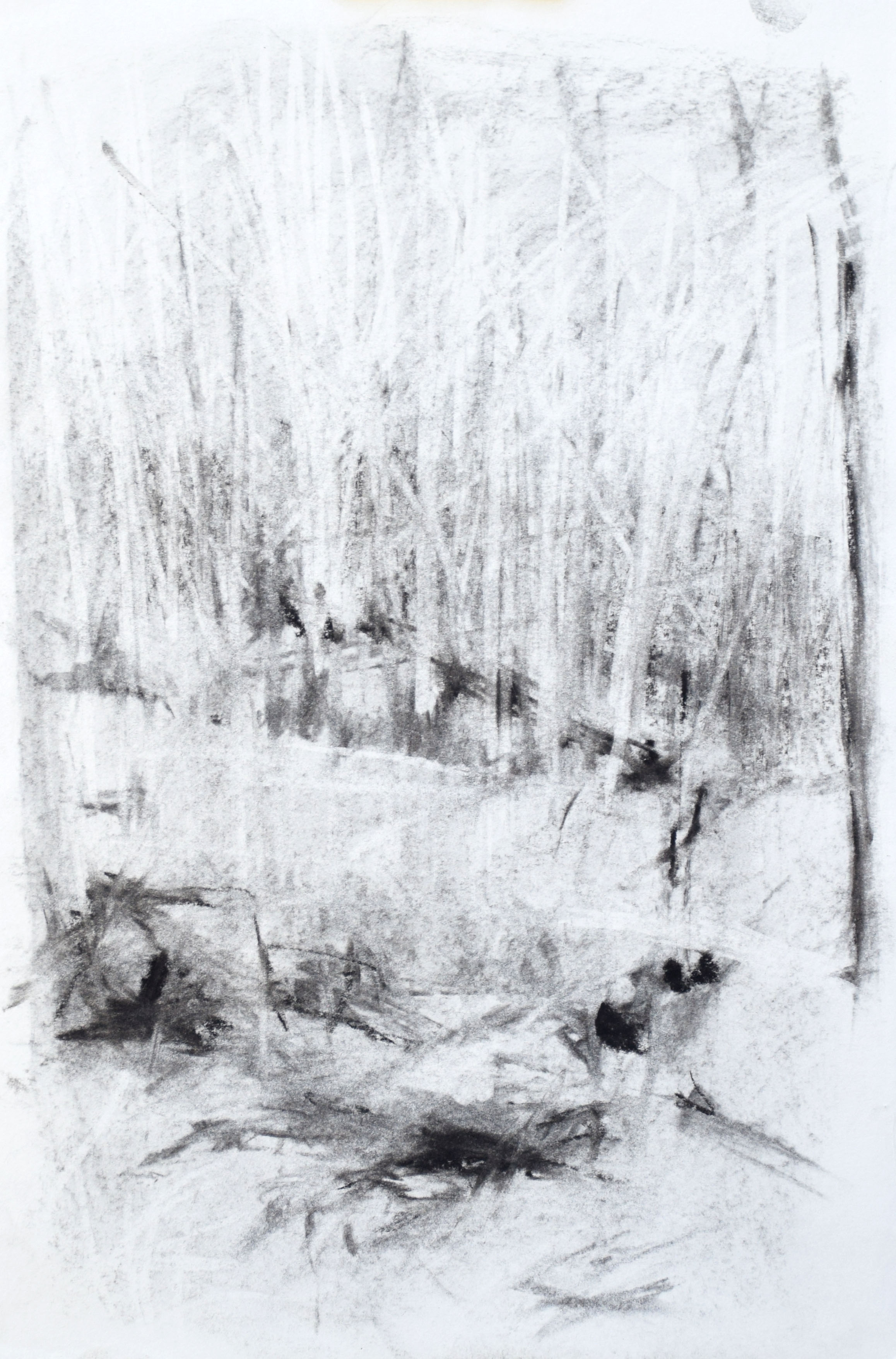 "#5 Yosemite I   Charcoal on Paper  11"" x 15""  $325   Click to Inquire"