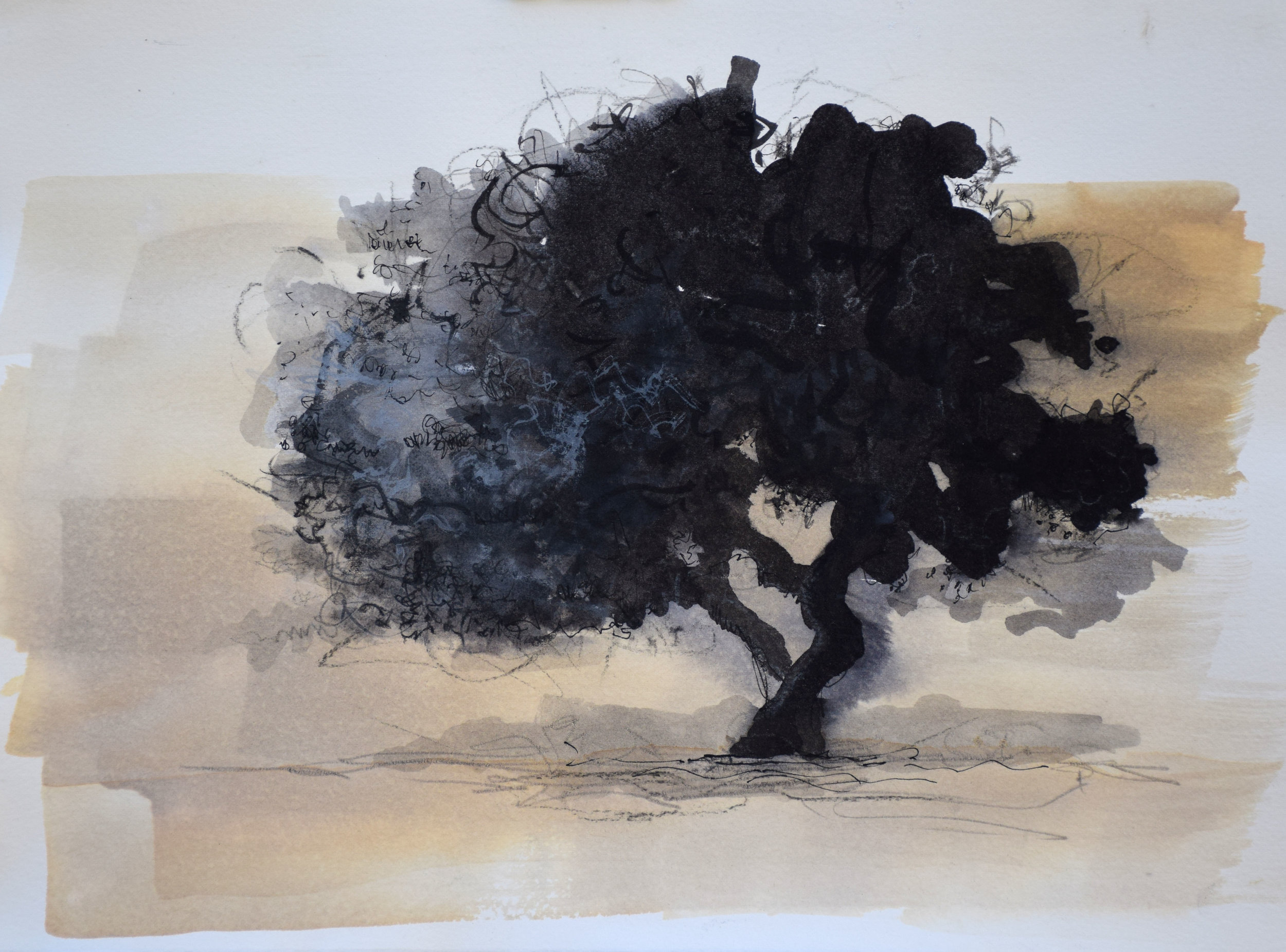 """#16 Timbatavi Tree   Ink on Paper  15"""" x 18""""  $700   Click to Inquire"""