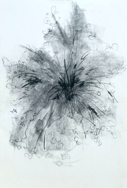 """Blooming   Charcoal on paper  14 1/2"""" x 20 1/2"""""""