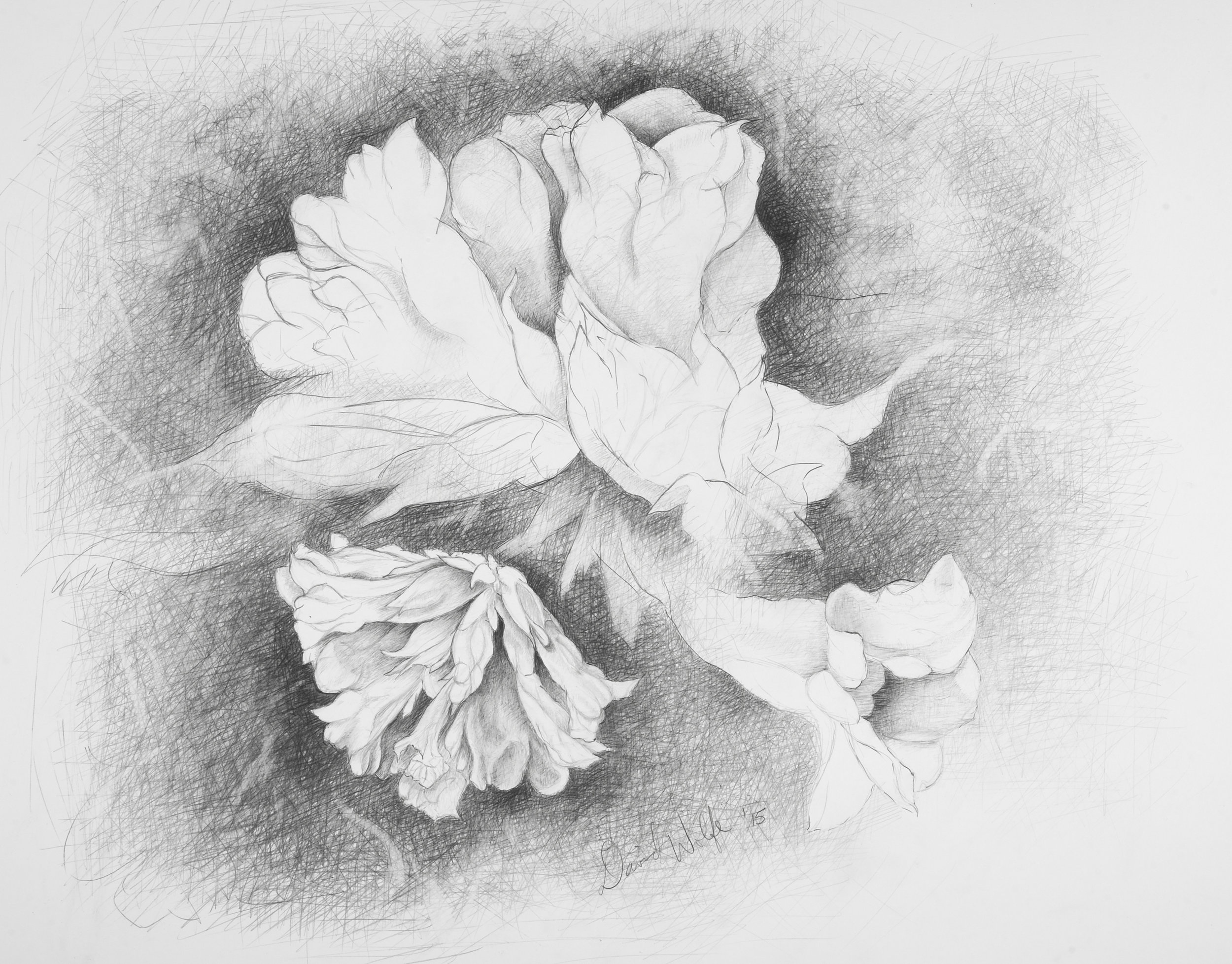 "Bell Flower II, 2015    Graphite on paper  25"" x 28"" (framed)  $960  Click image to enlarge ⦿  Inquire"
