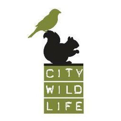 city wildlife.jpeg