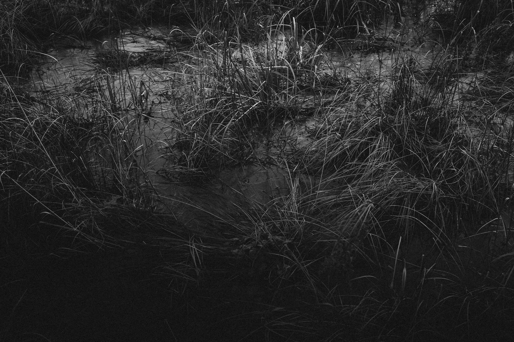 amherstfields-72.jpg