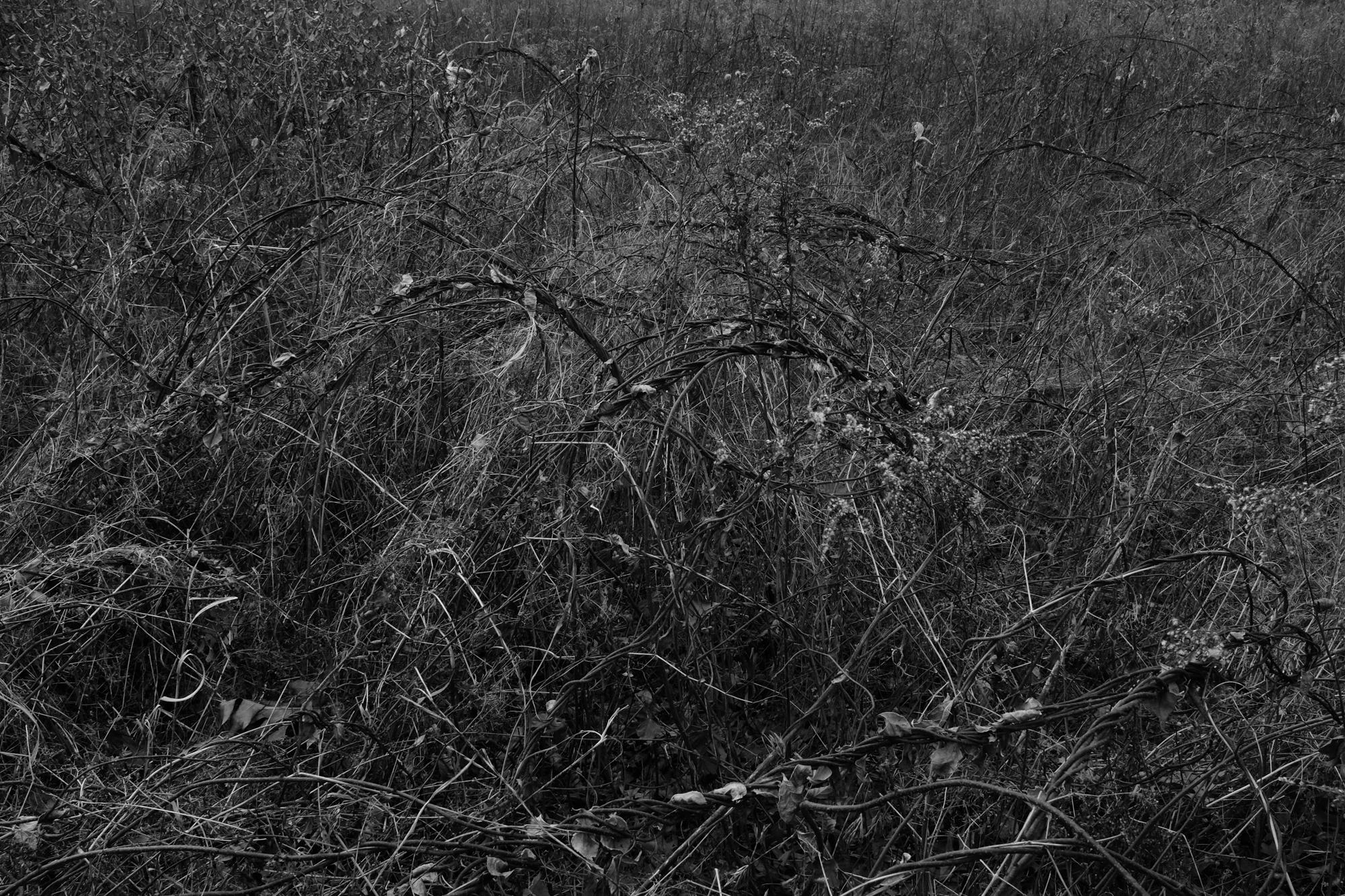 amherstfields-73.jpg