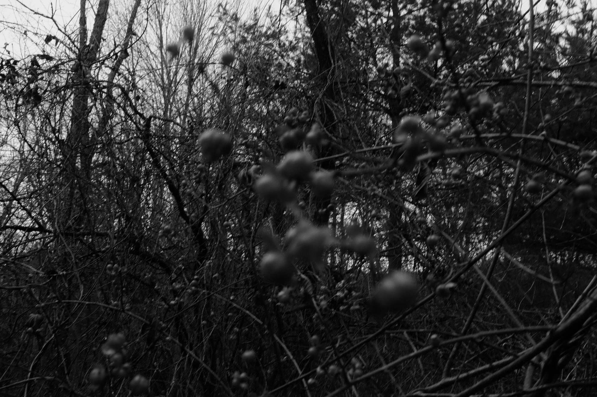 amherstfields-68.jpg