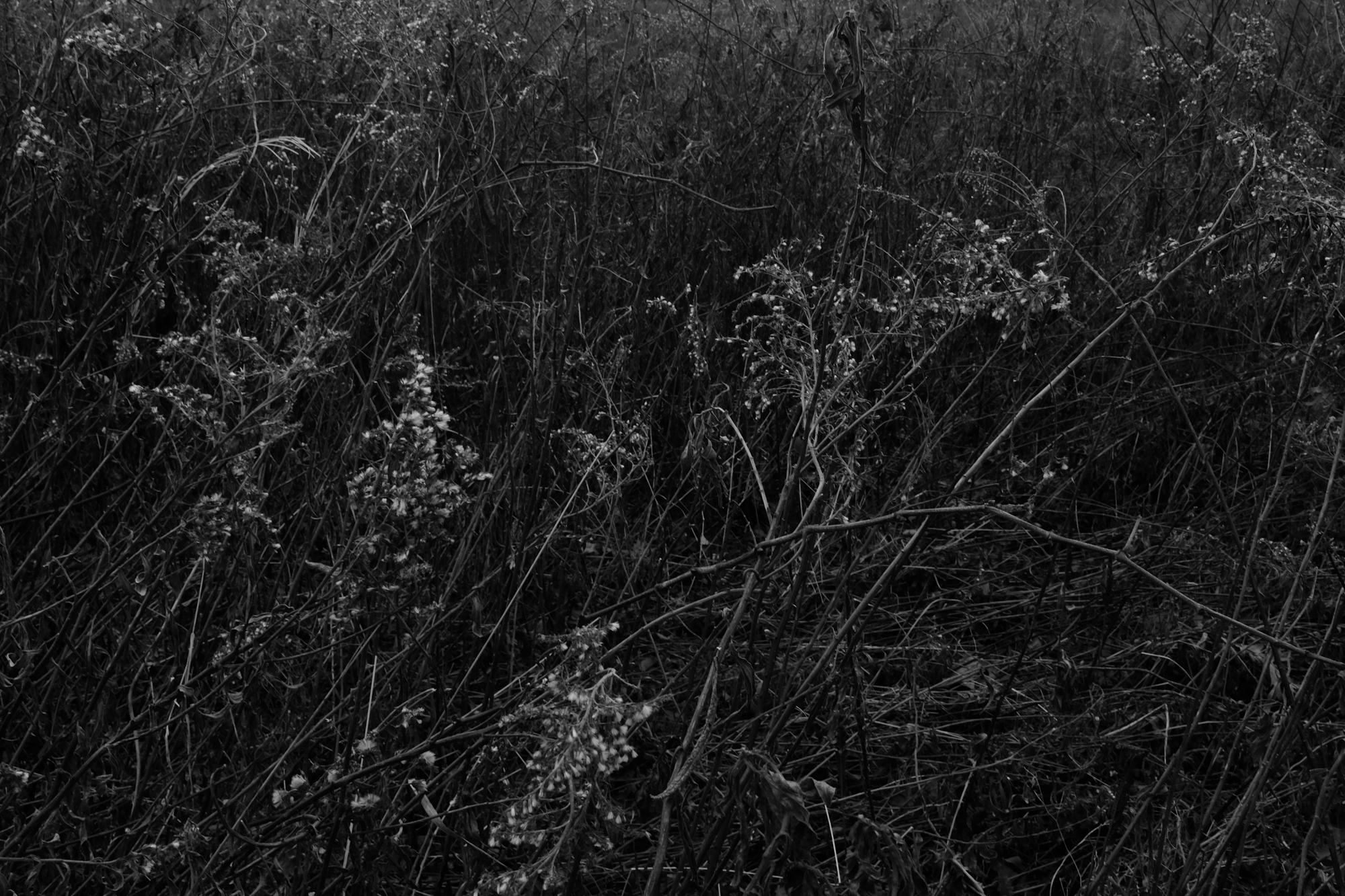 amherstfields-60.jpg